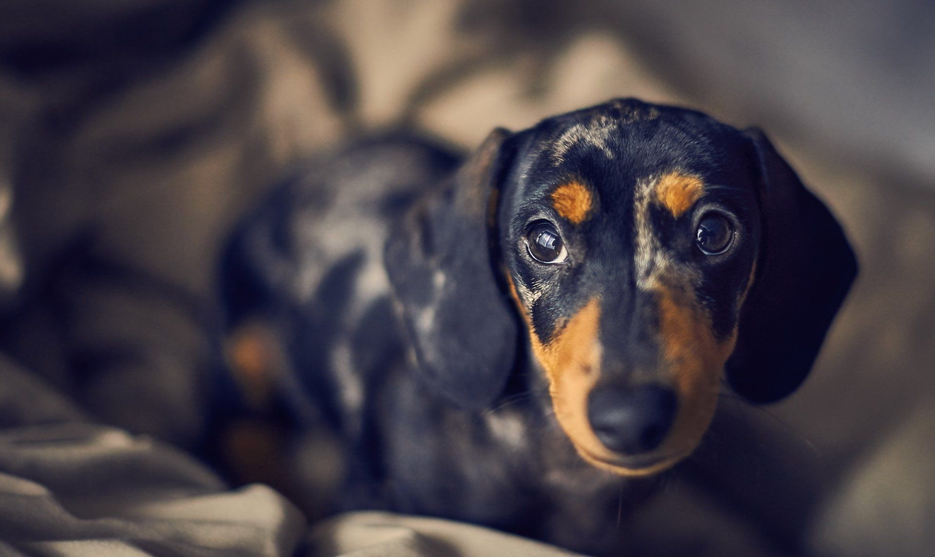 PreviousNext. Previous Image Next Image. dachshund wallpaper 1280×1024 wallpapers  dachshund 1280×1024