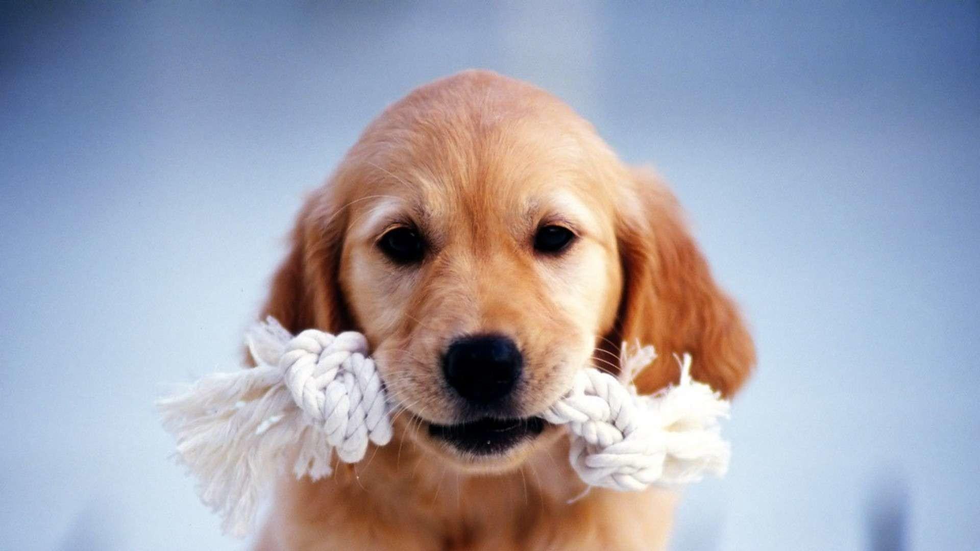 Cute HD Dachshund Puppies Wallpaper   HDWallWide.com