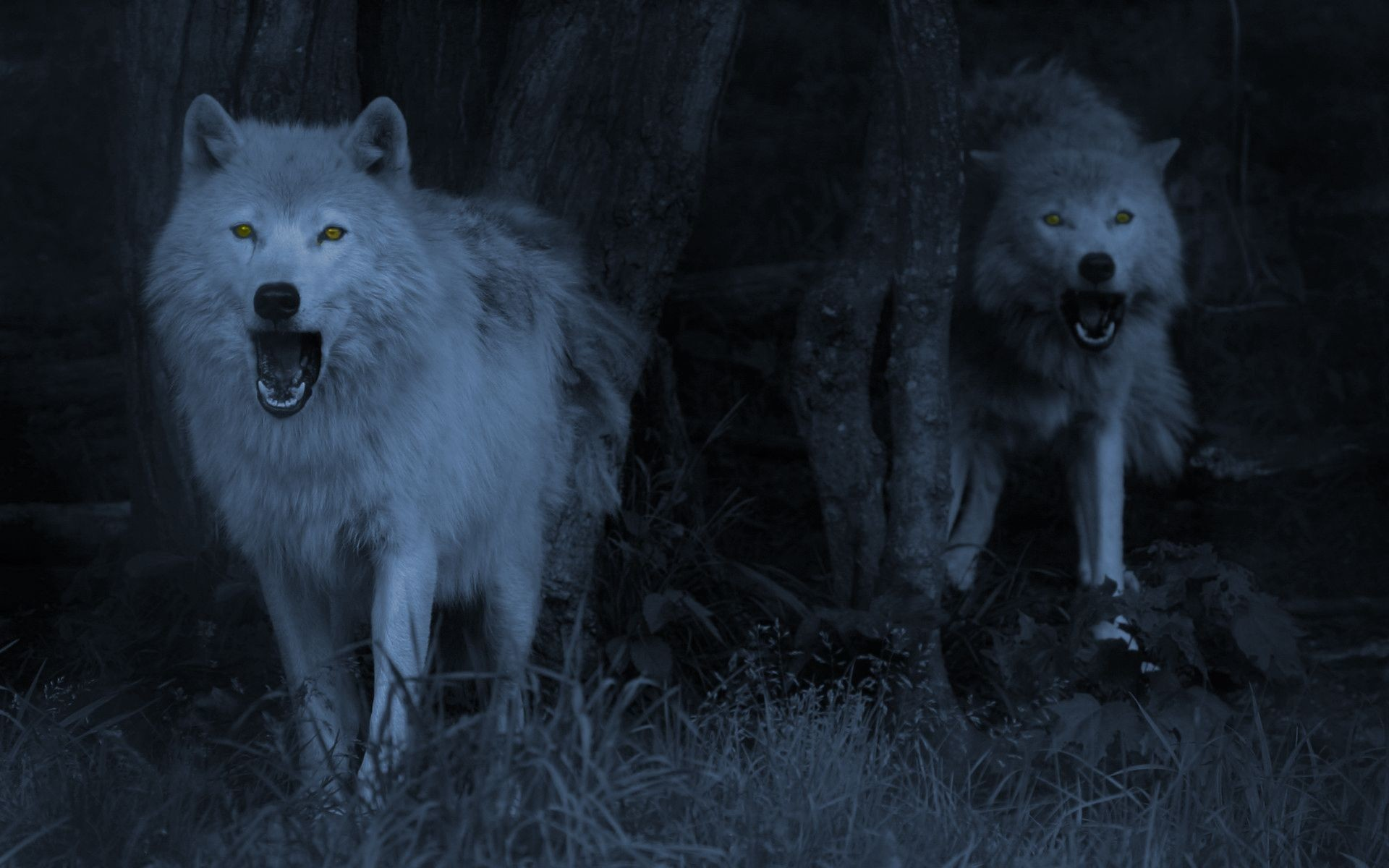 Wallpaper Wolves