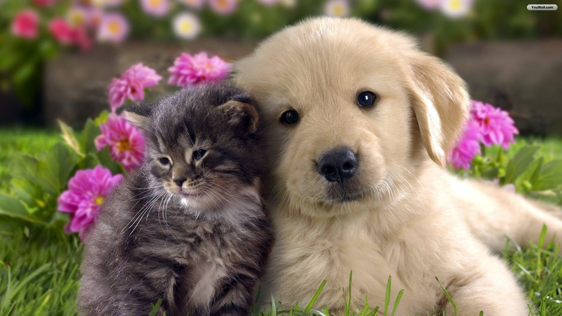 wallpapers,image,free images,Cats wallpapers,Cats,Dogs .
