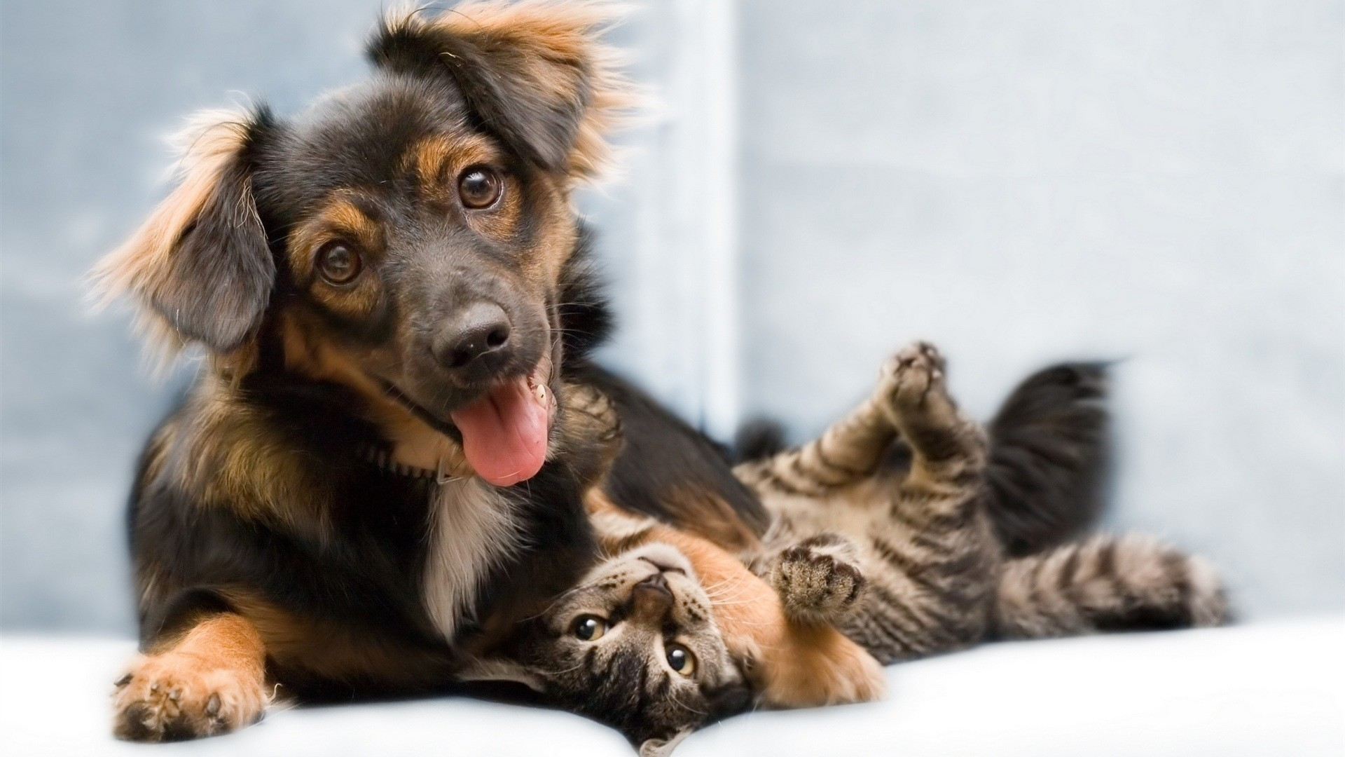 cats and dogs – Friendship | Download Desktop Wallpapers – Suit Up .