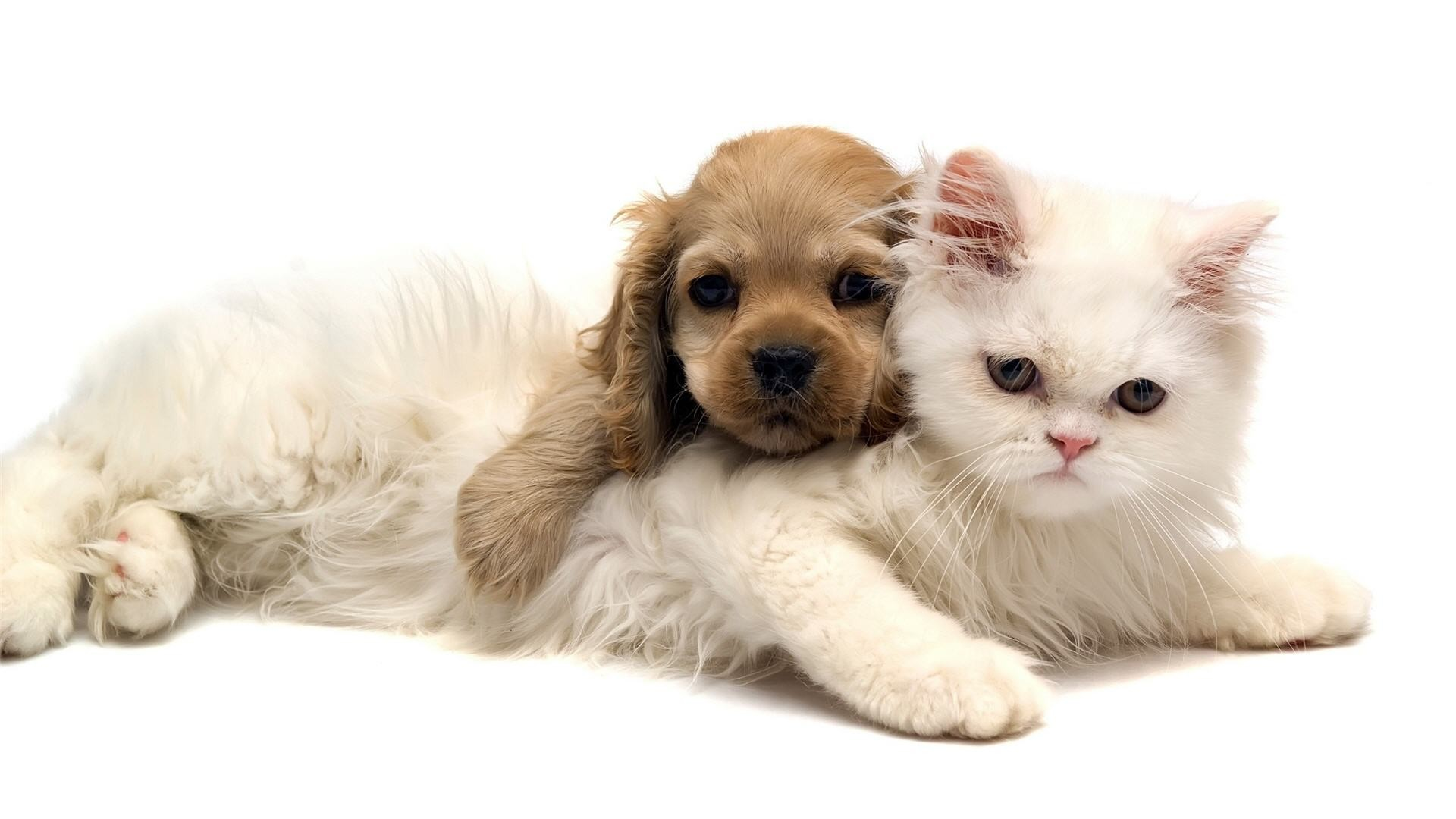Adorable Cat and Dog Wallpaper | Wallpapers Green Cat Cute And Dog Jpg  | #
