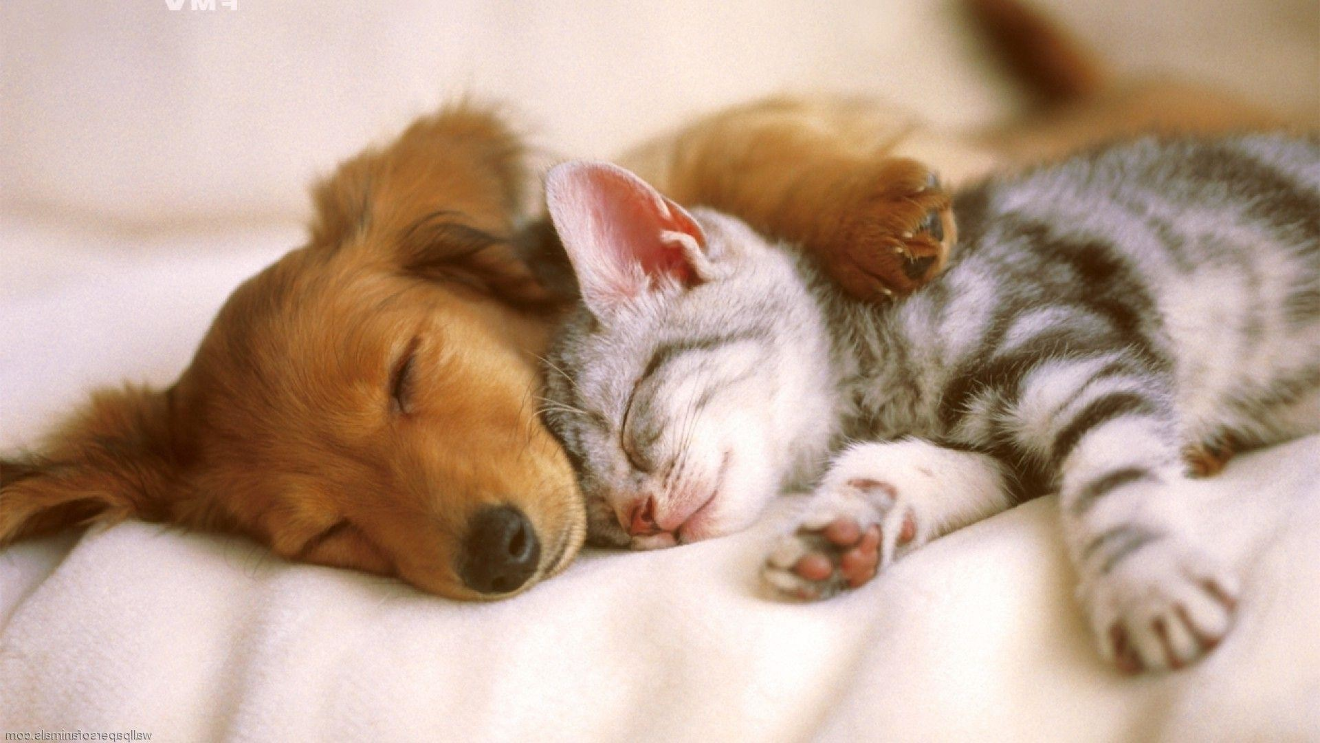 Backgrounds Images Cats And Dogs, Wallpapers, HD Wallpapers .