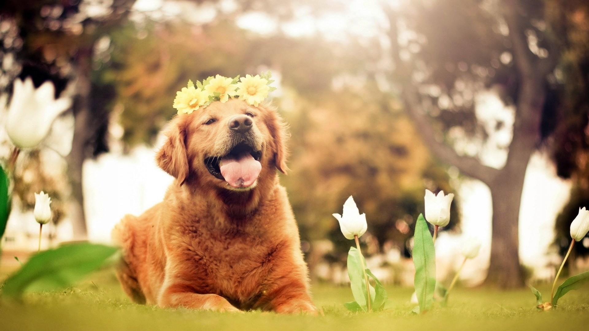 Dogs Desktop Backgrounds – Wallpaper, High Definition, High Quality .