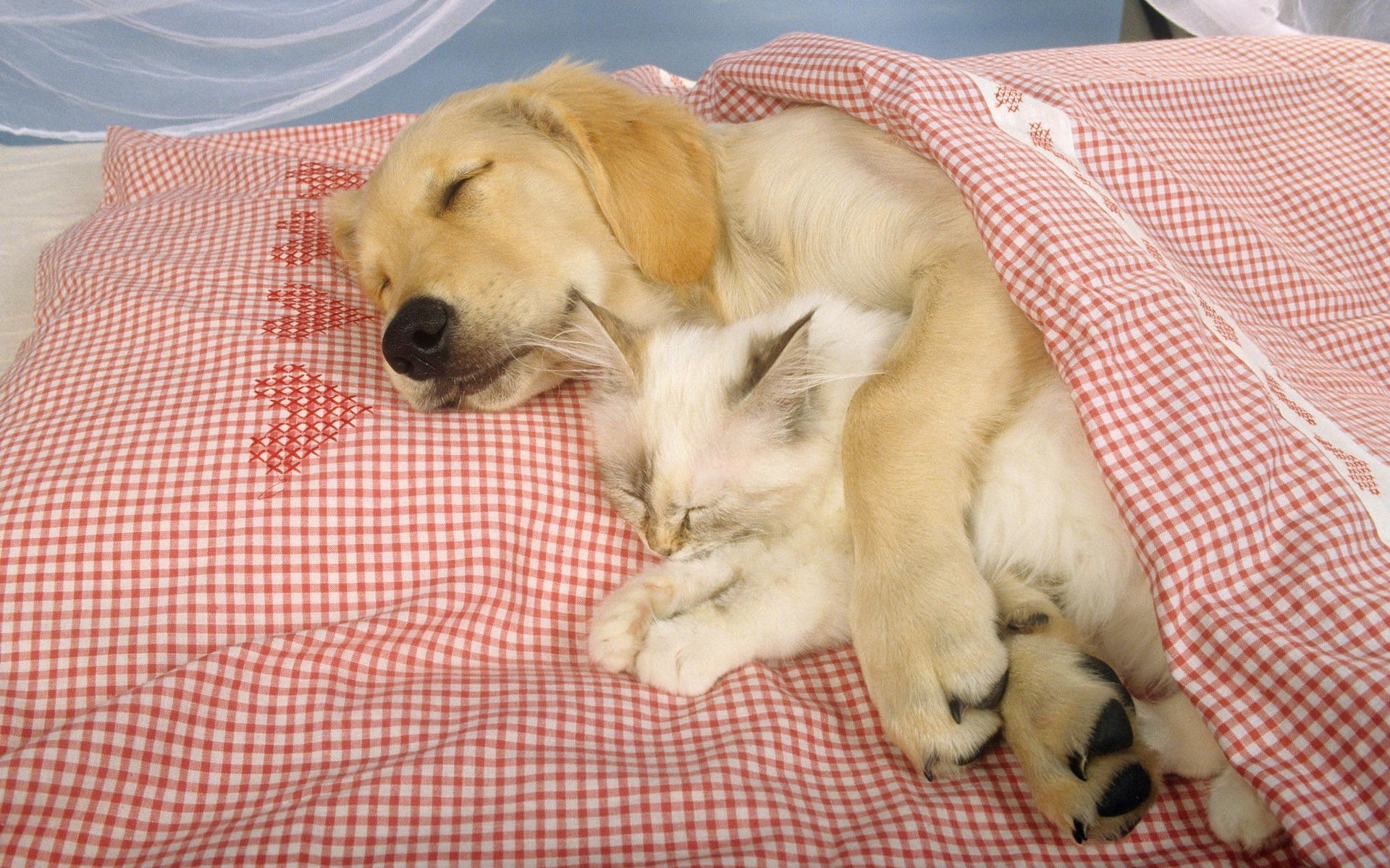wallpaper cats and dogs – Wallpaper