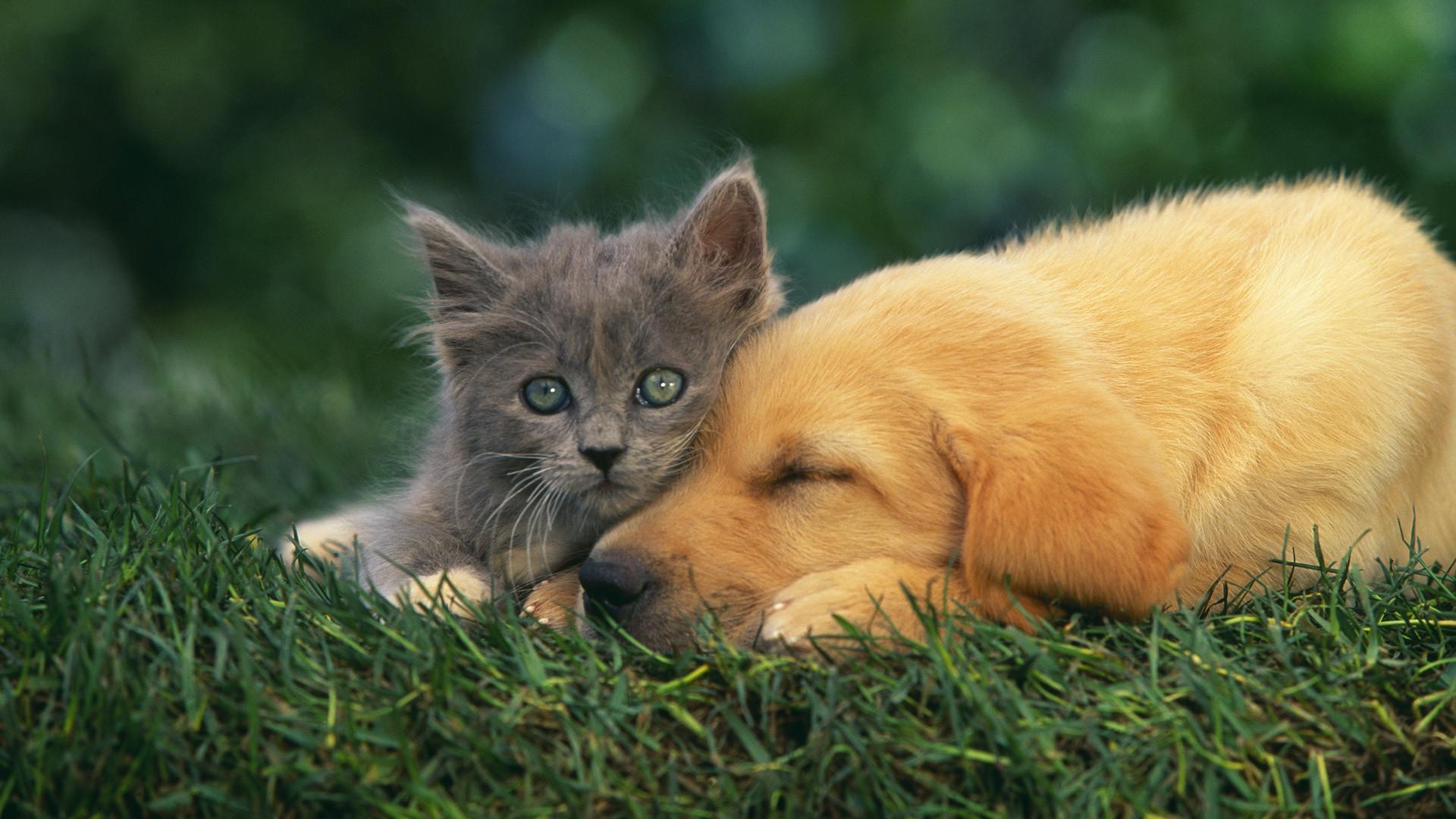 Cat and Dog Wallpaper | HD Desktop Wallpapers