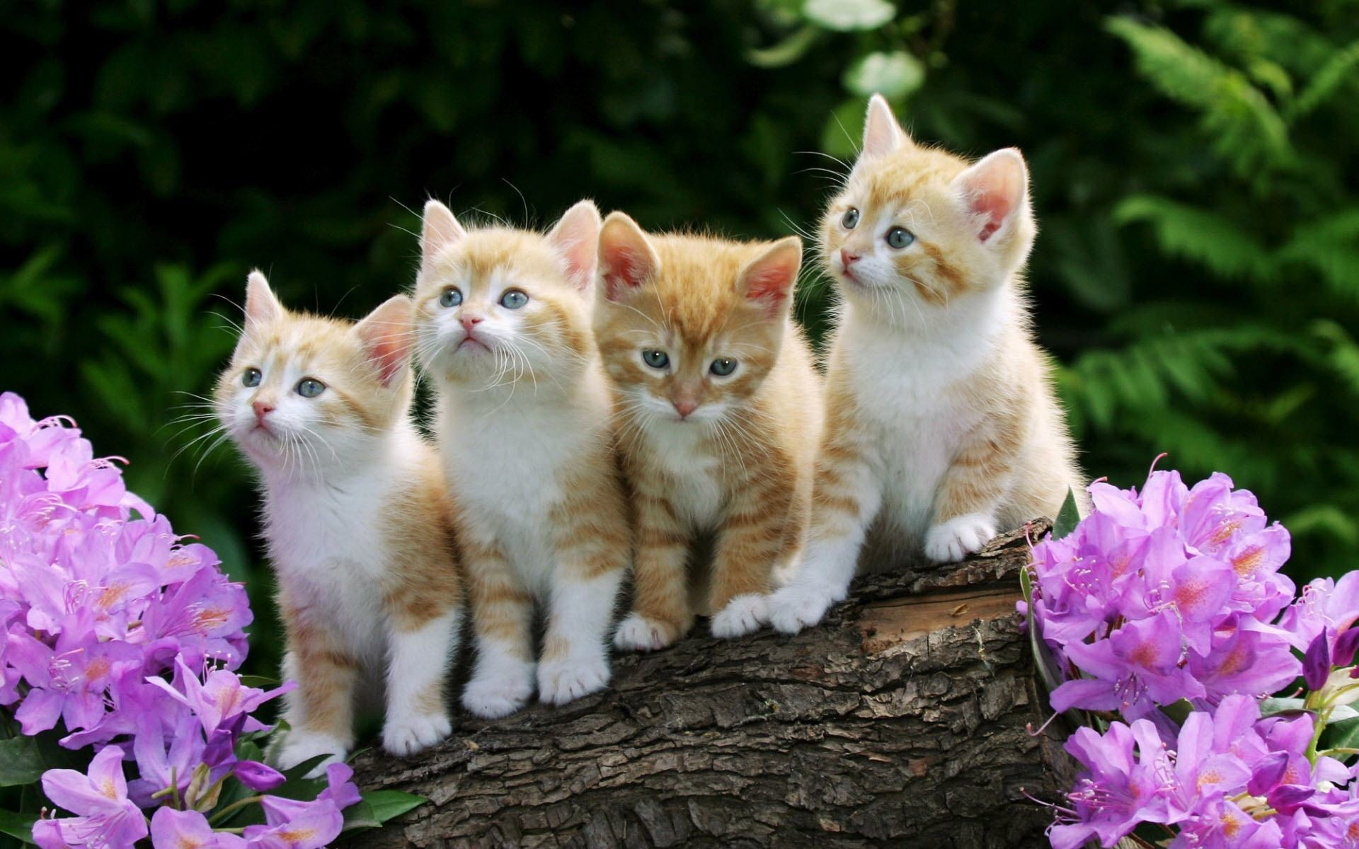 Cute Baby Cats And Dogs – wallpaper.
