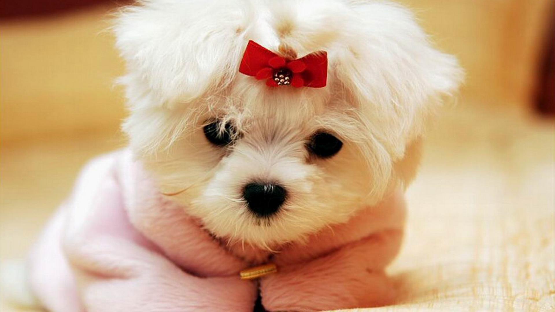 6. cute-dog-wallpapers-HD6-600×338