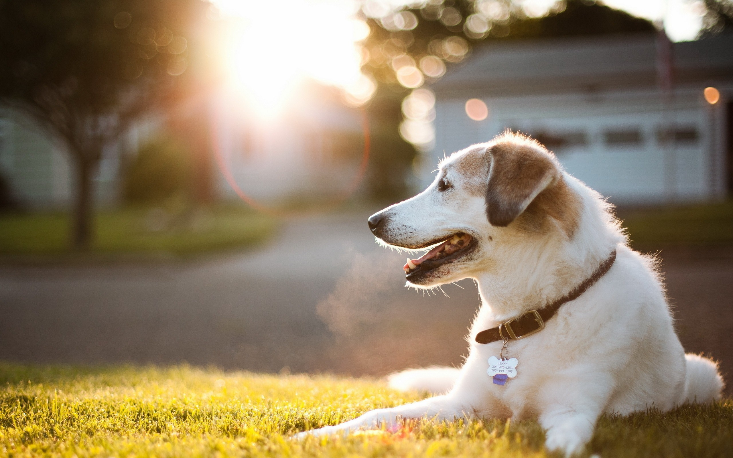 0 Dog Wallpaper HD Pretty Photos Dog Wallpapers Free Download Wide Pets  Animals HD Desktop Images