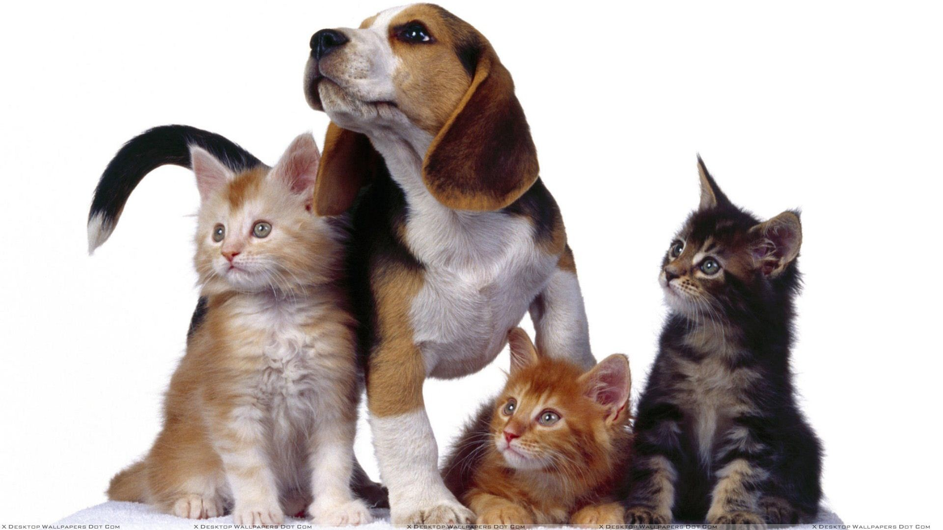 """You are viewing wallpaper titled """"3 Cats With Dog …"""