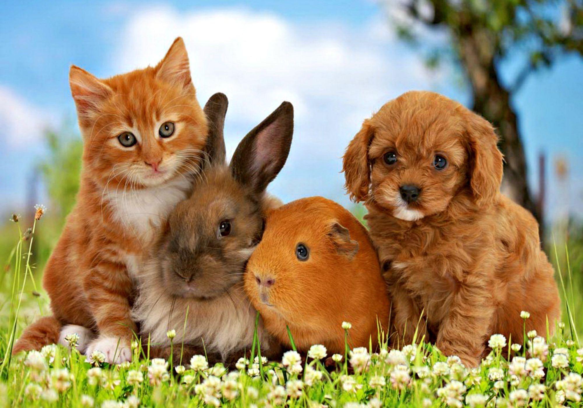 Cats: Little Friends Friend Dog Sweet Cute Animal Bunny Orange .