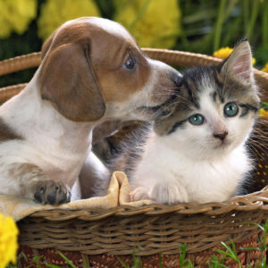 Cats Dogs Wallpaper Desktop