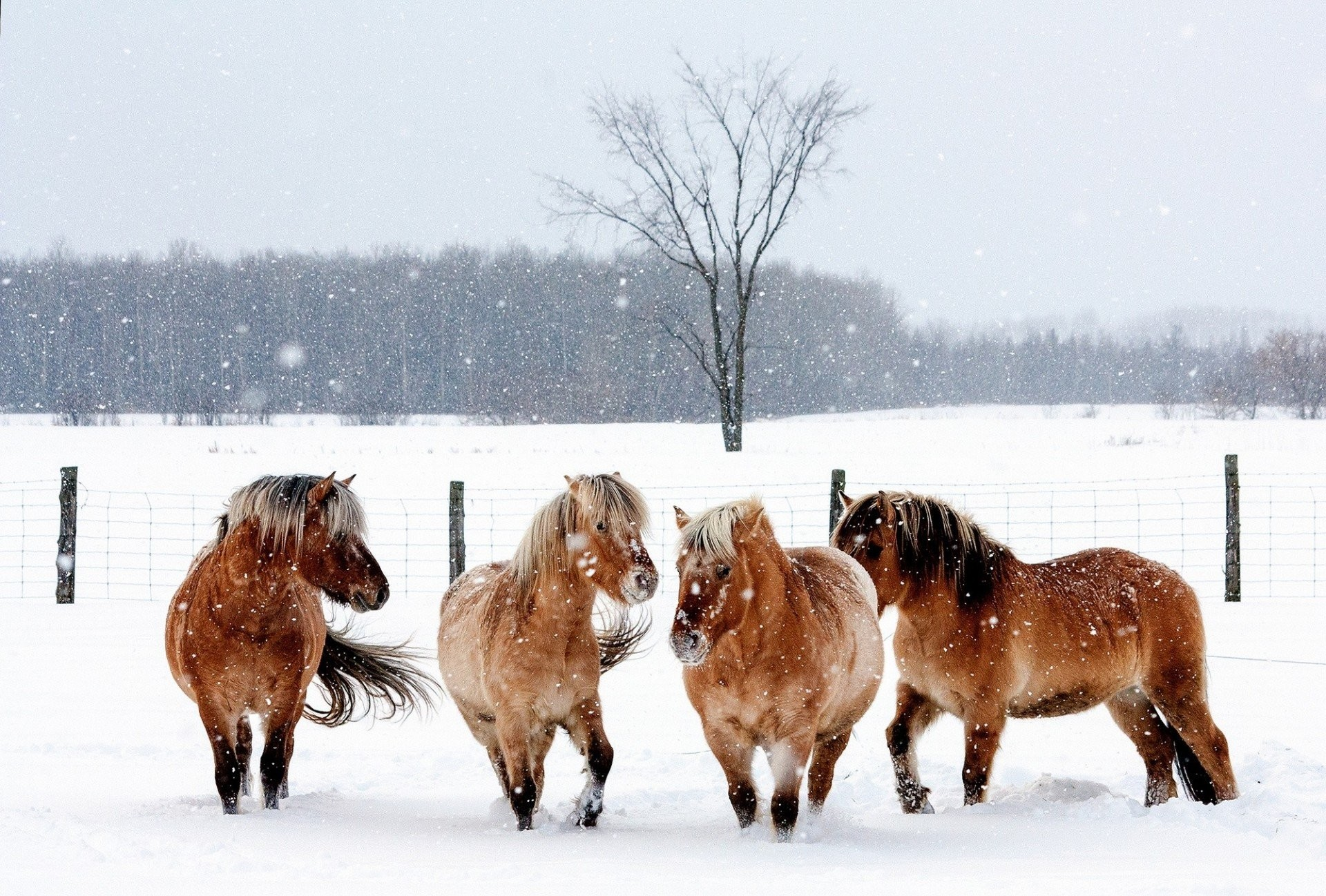 snowflakes horse nature fence snow animals winter