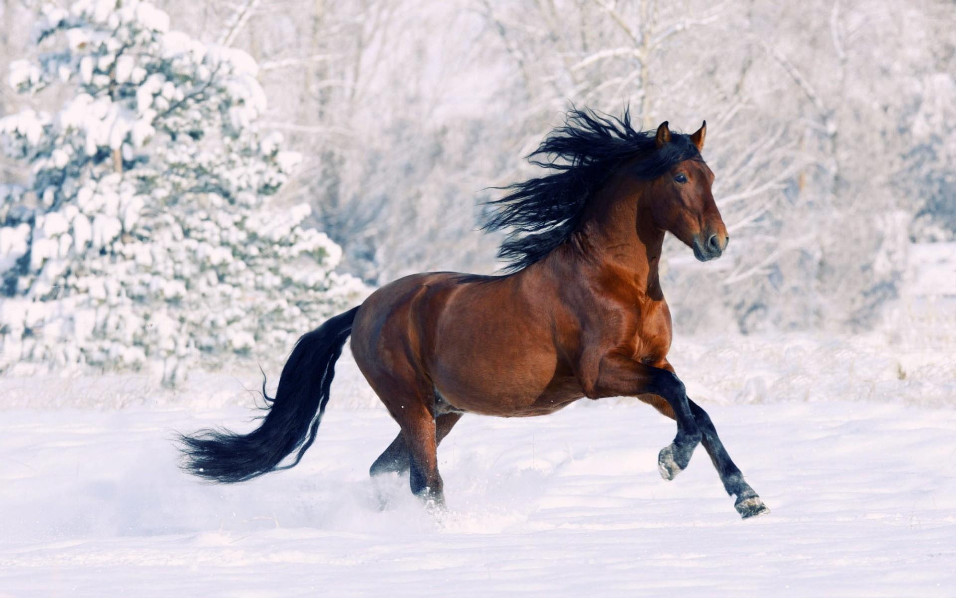 beautiful horses wallpaper. Â«Â«