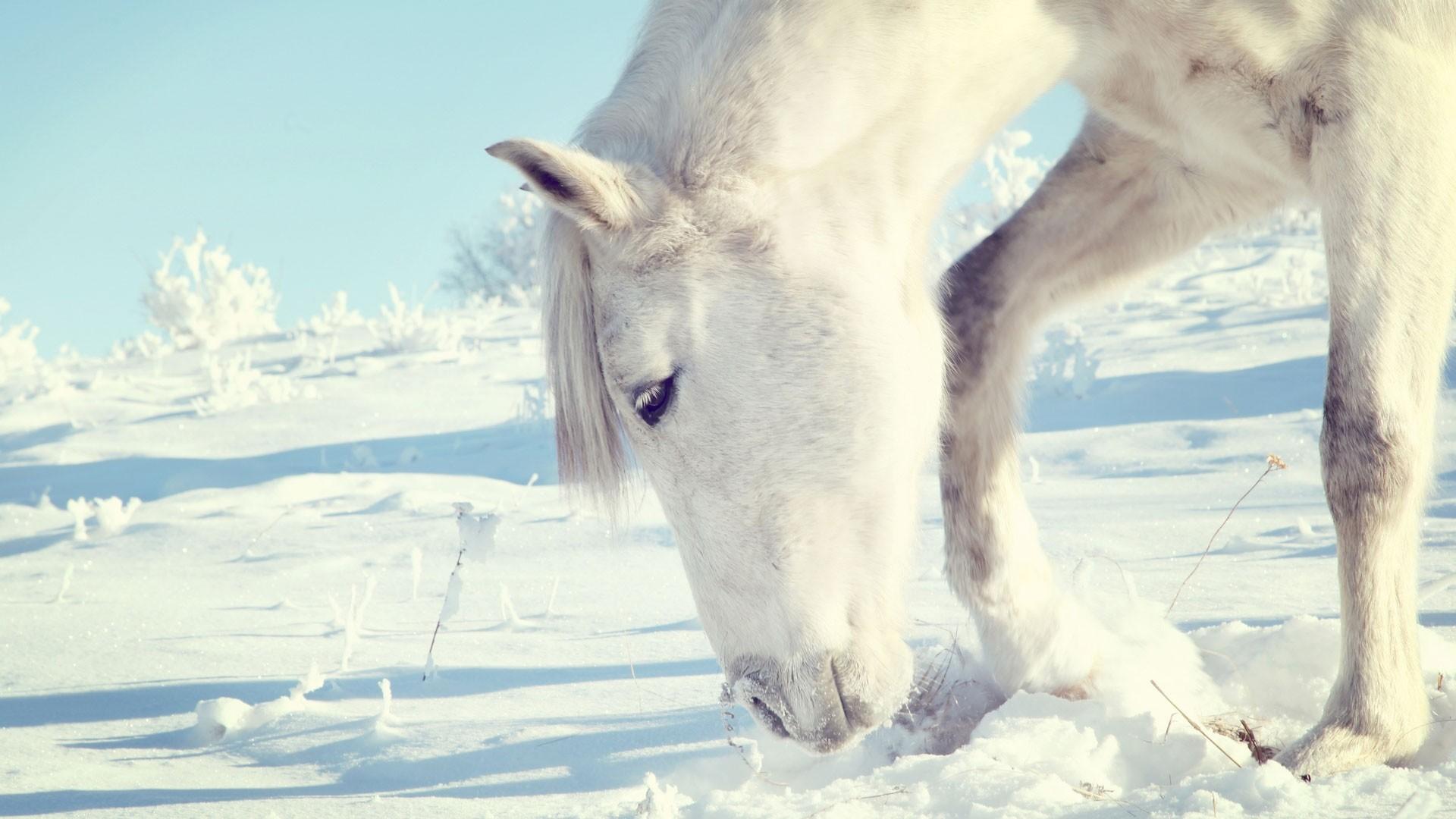 Preview wallpaper horse, snow, shrubs, winter, head 1920×1080