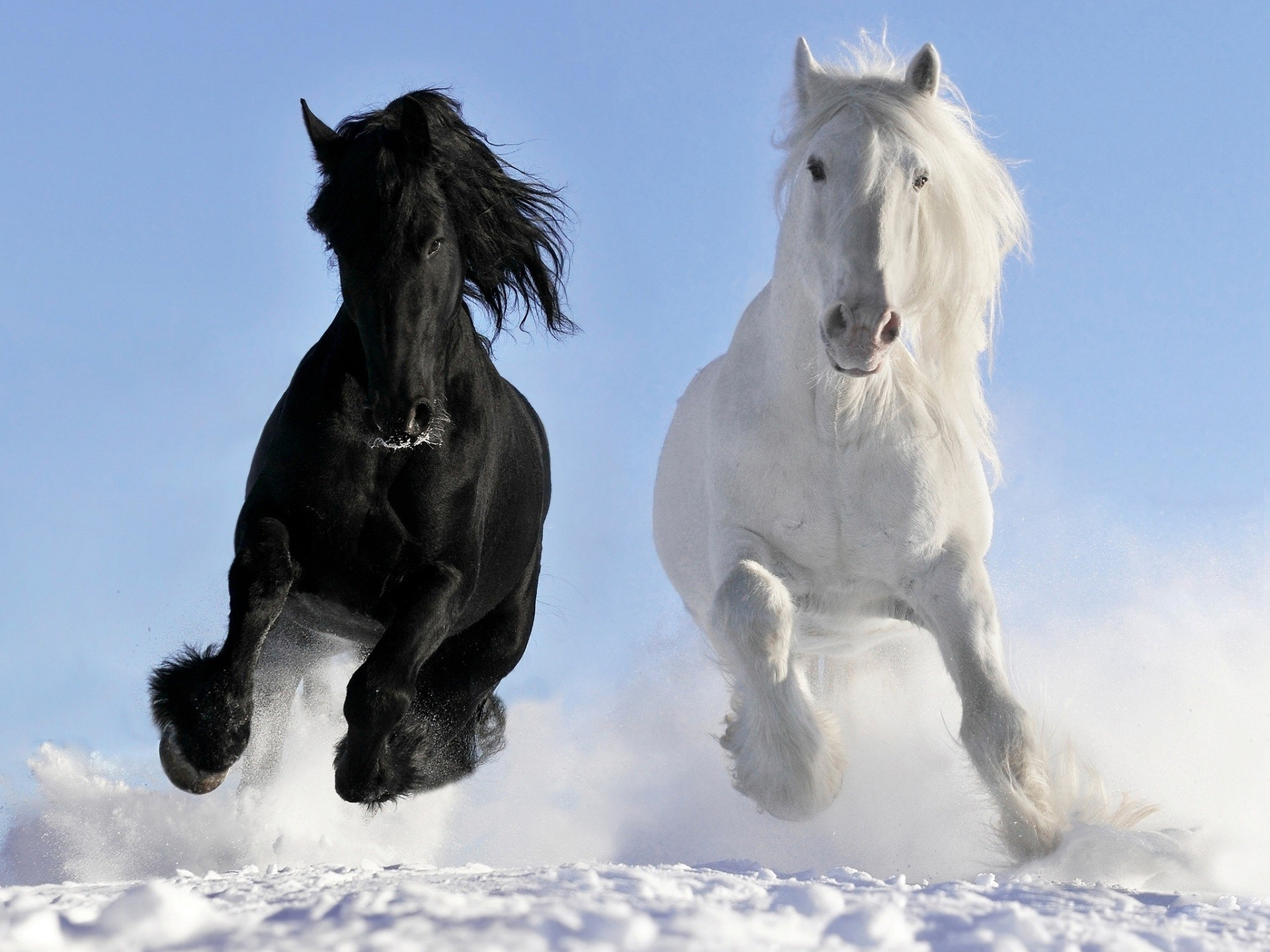 nature, Horse, Snow, Black Wallpapers HD / Desktop and Mobile Backgrounds