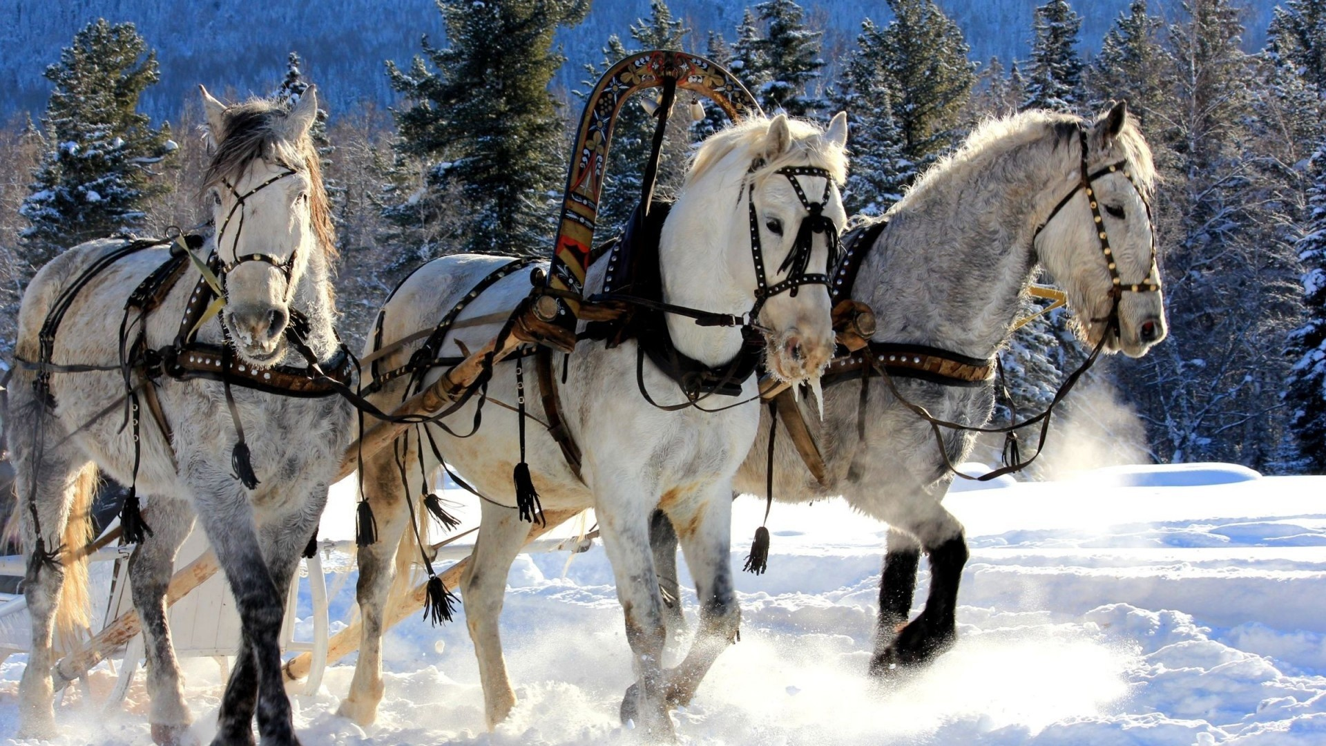Wallpaper horses, three, team, snow, sled