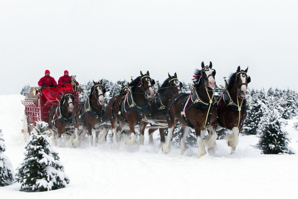Beer alcohol drink poster horse horses christmas winter snow wallpaper |  | 334858 | WallpaperUP