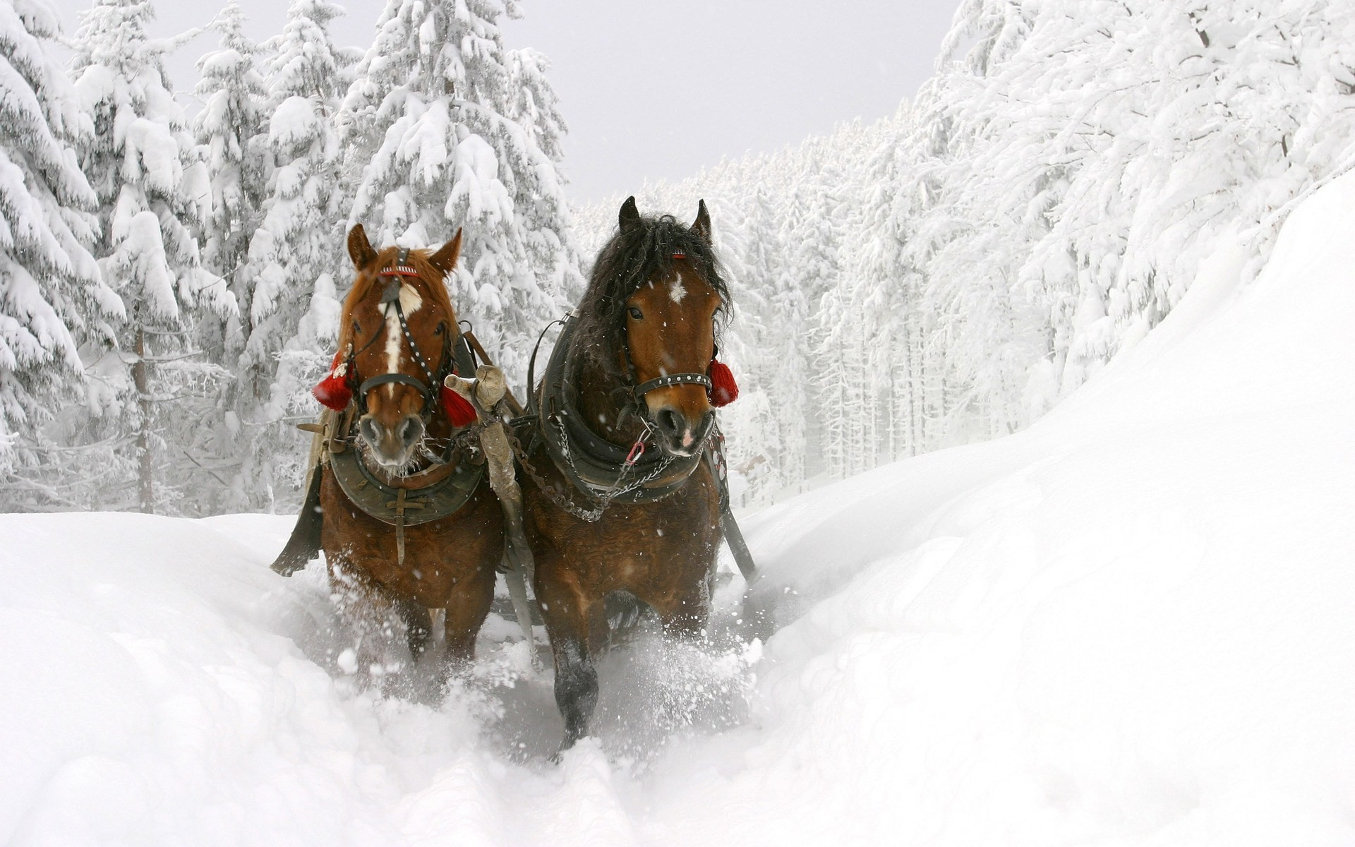 Horses Pulling Carriage in the Snow wallpaper