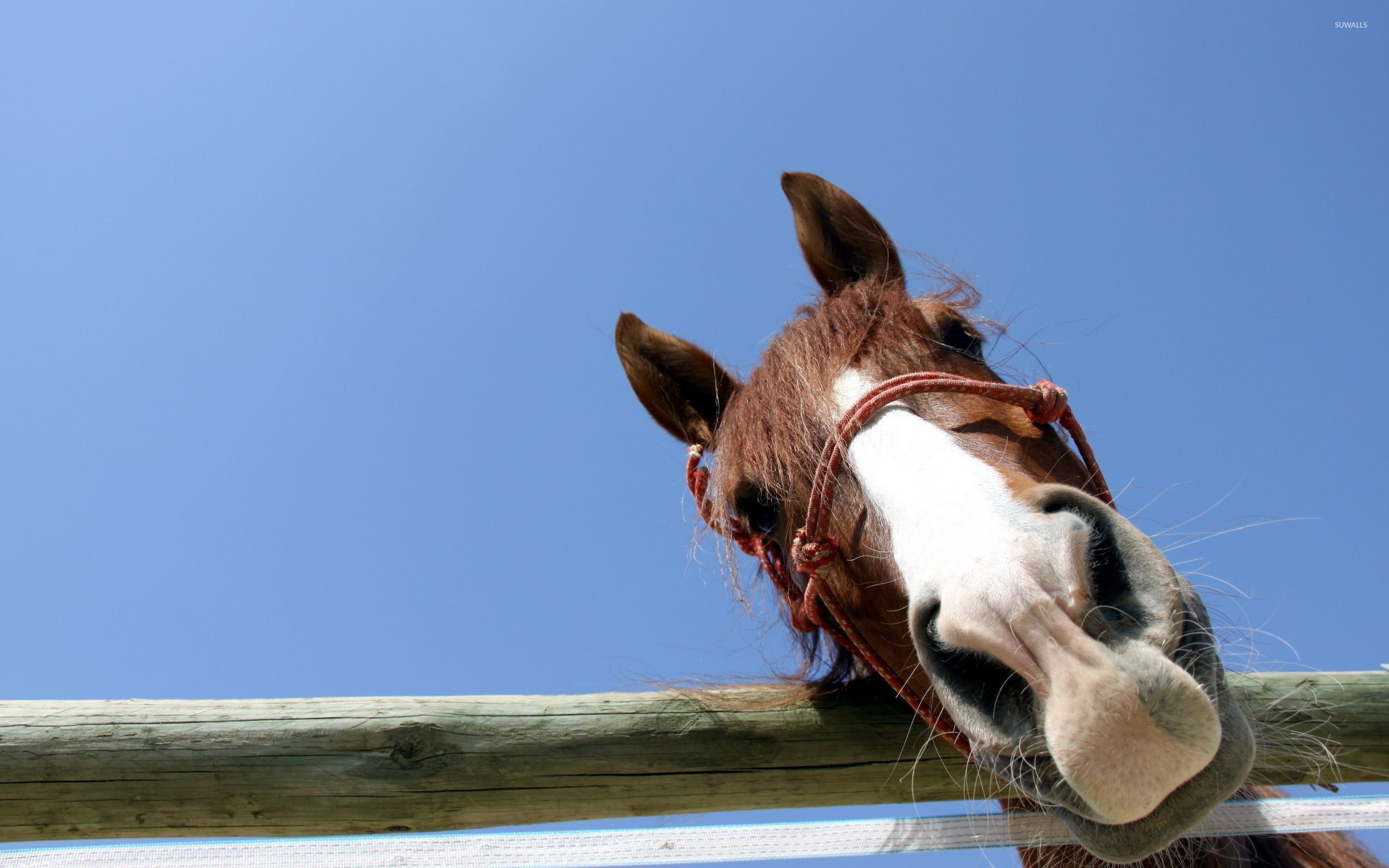 Curious horse wallpaper jpg