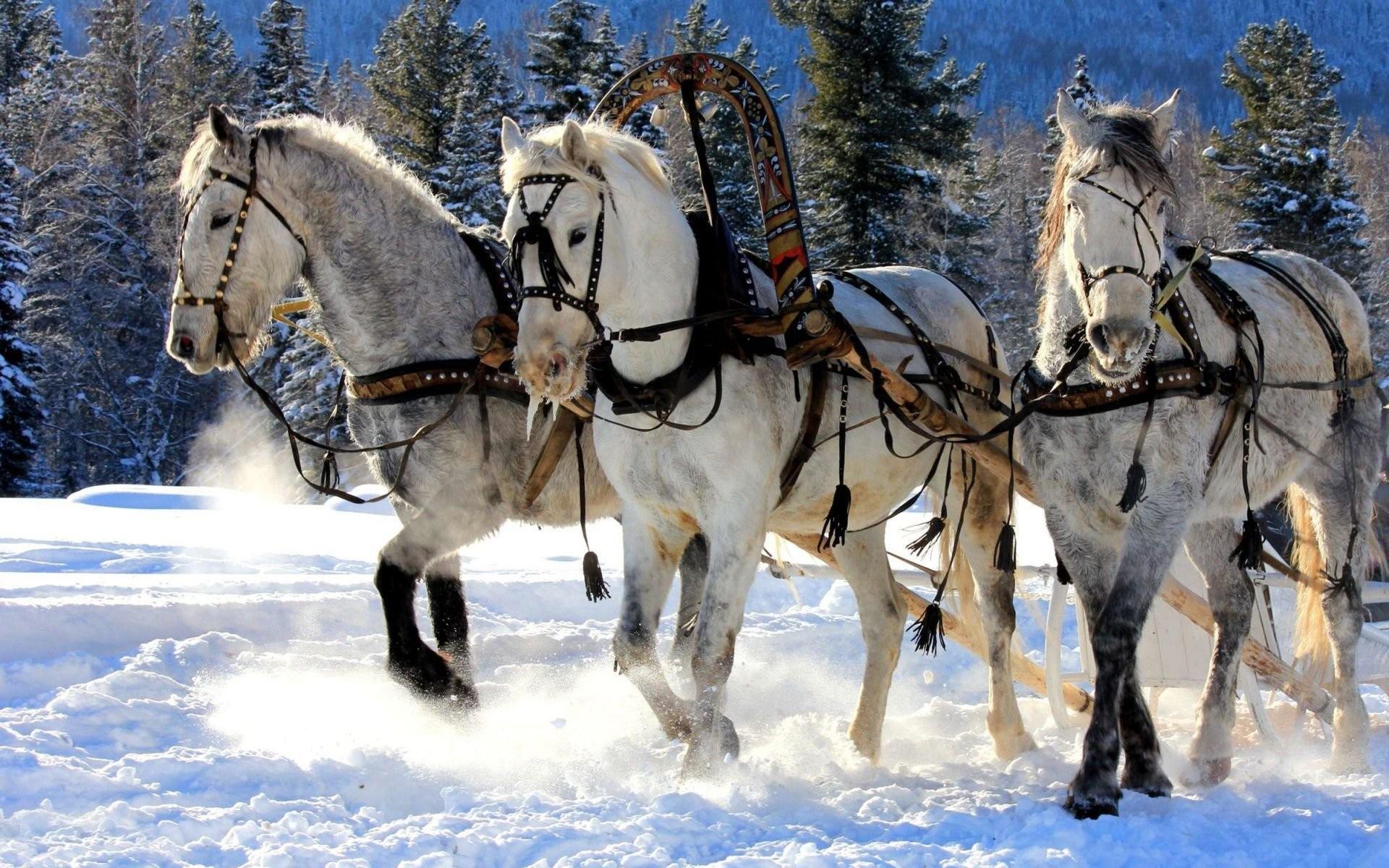 Winter snow nature landscape horse horses wallpaper | | 866081 |  WallpaperUP