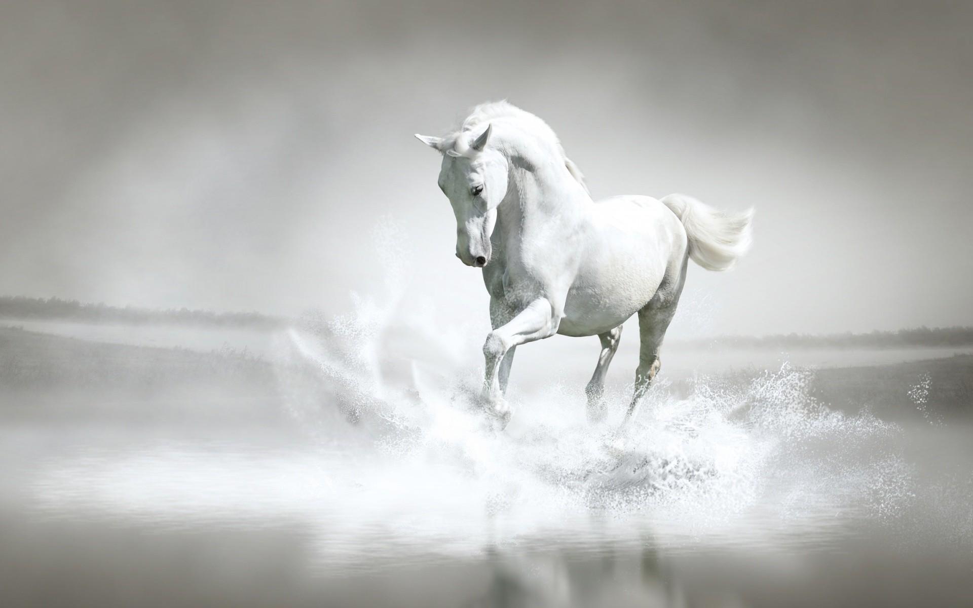 pferdebilder als hintergrund | … images White Horse ♡ HD wallpaper and  background photos