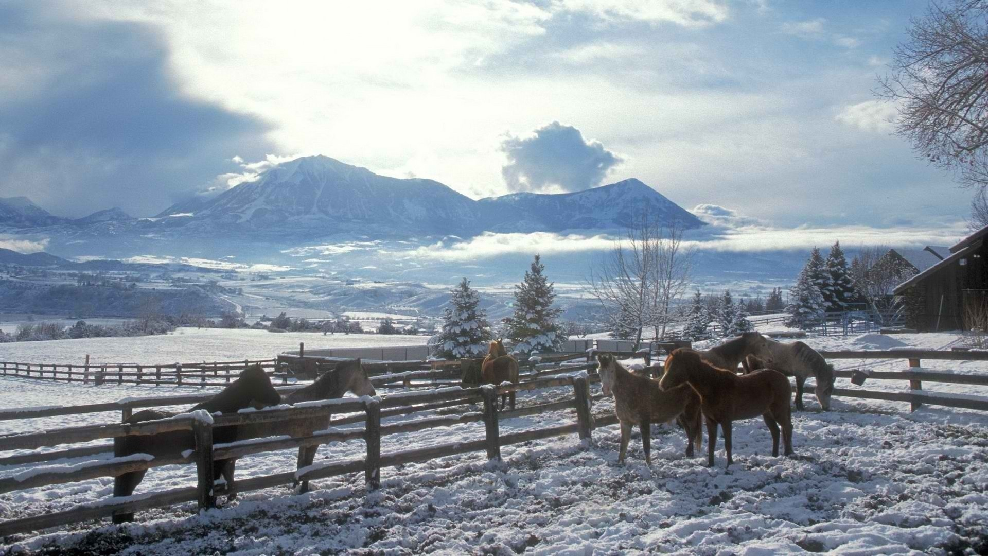 Clouds landscapes nature winter snow trees skylines fences country horses  horse fence wallpaper | | 80479 | WallpaperUP