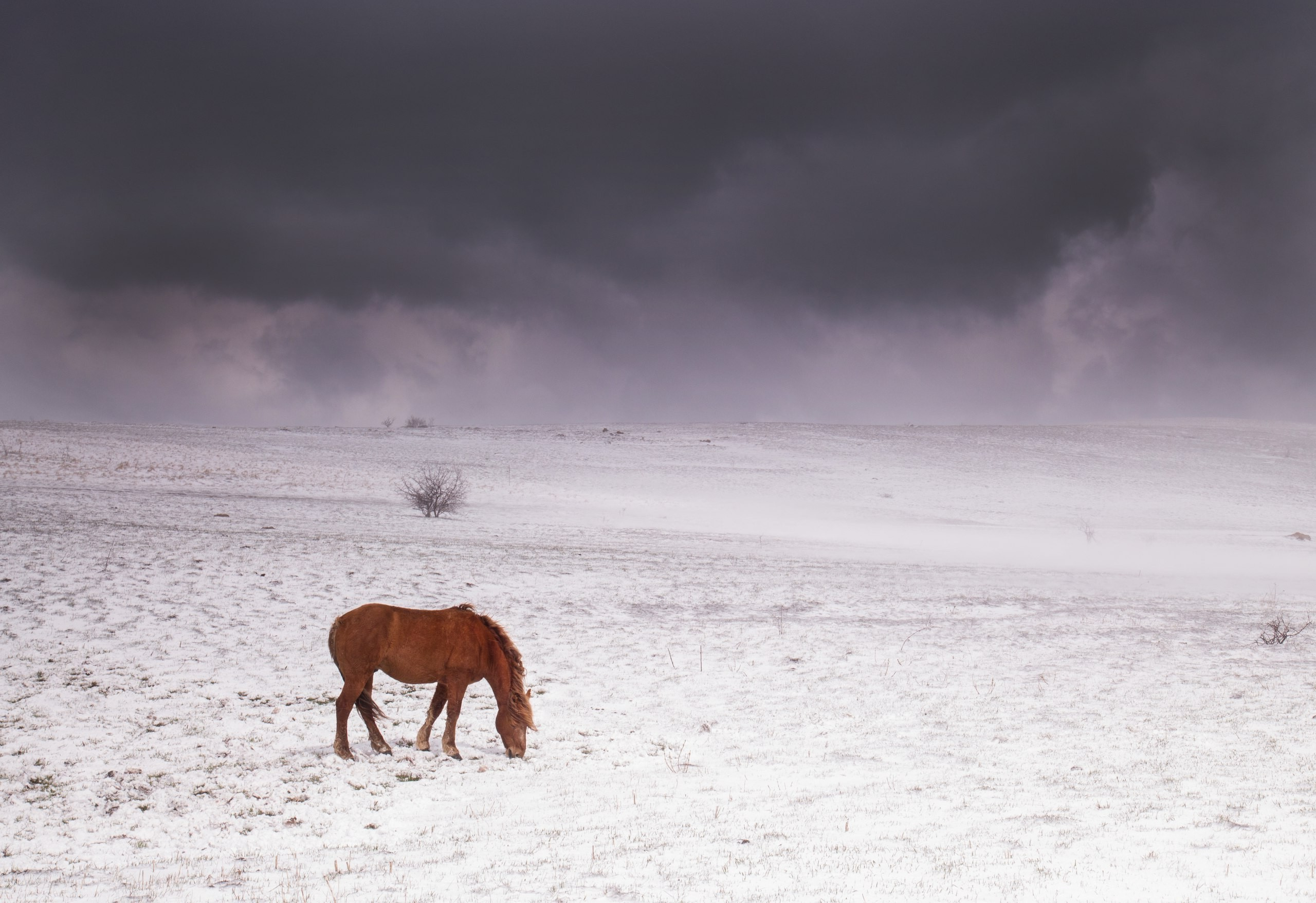 horse mountains crimea snow sky Wallpapers HD / Desktop and Mobile  Backgrounds