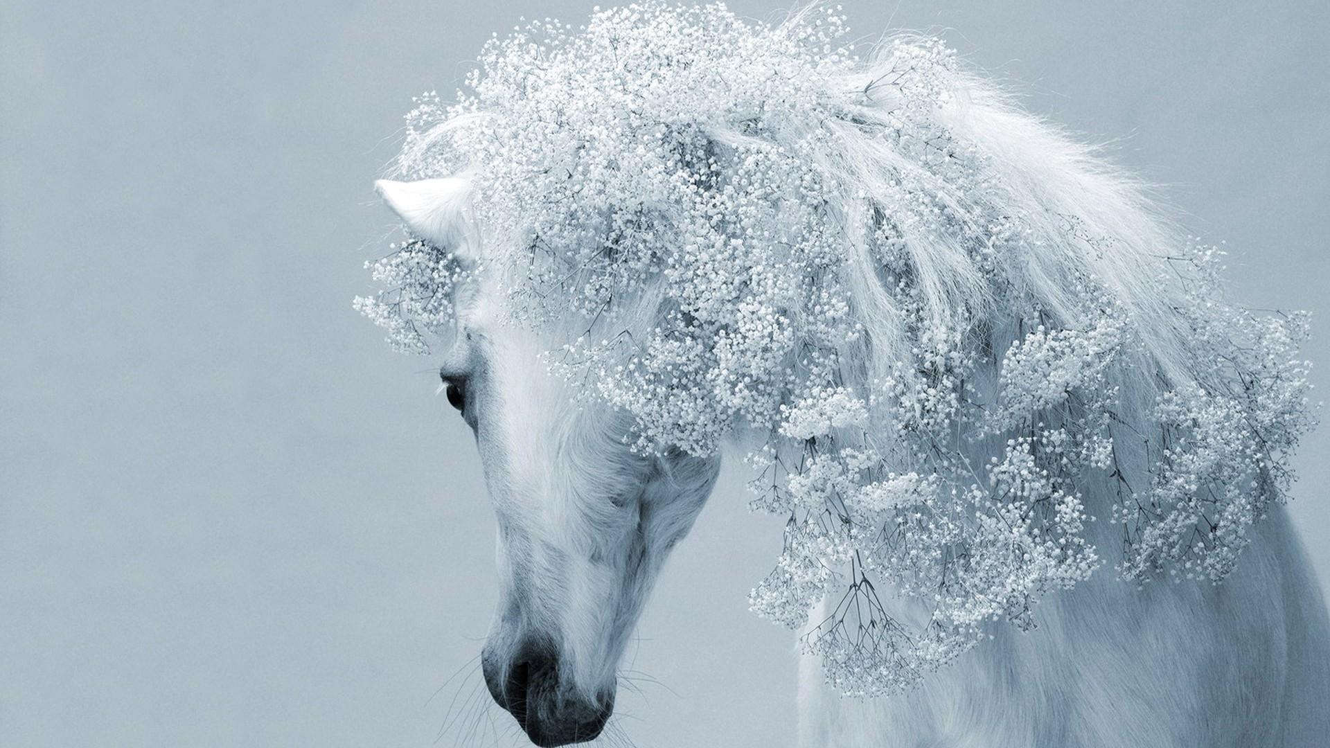 White-Horse-Wallpaper-HD – Magic4Walls.com