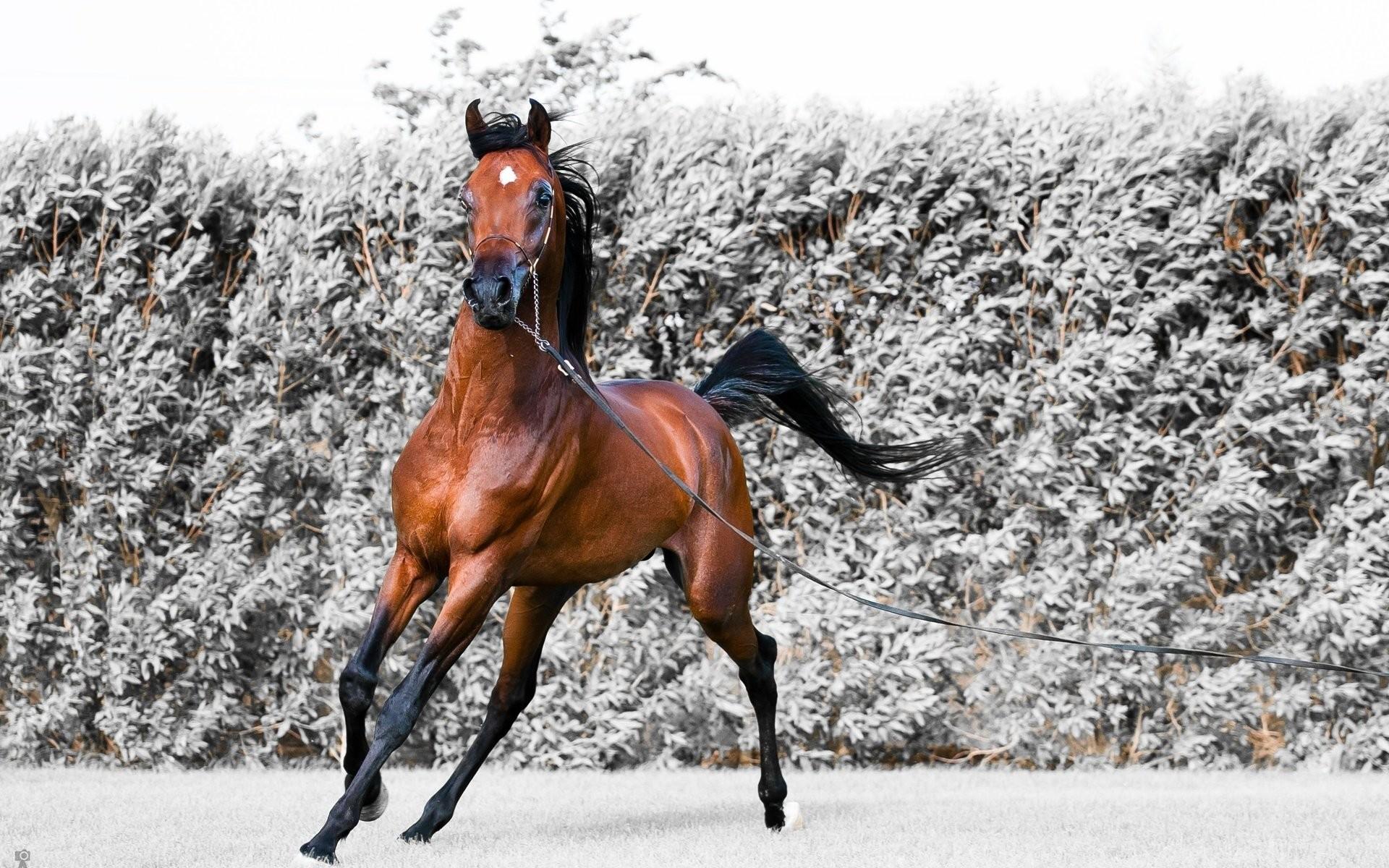 Animal – Horse Snow Winter Wallpaper