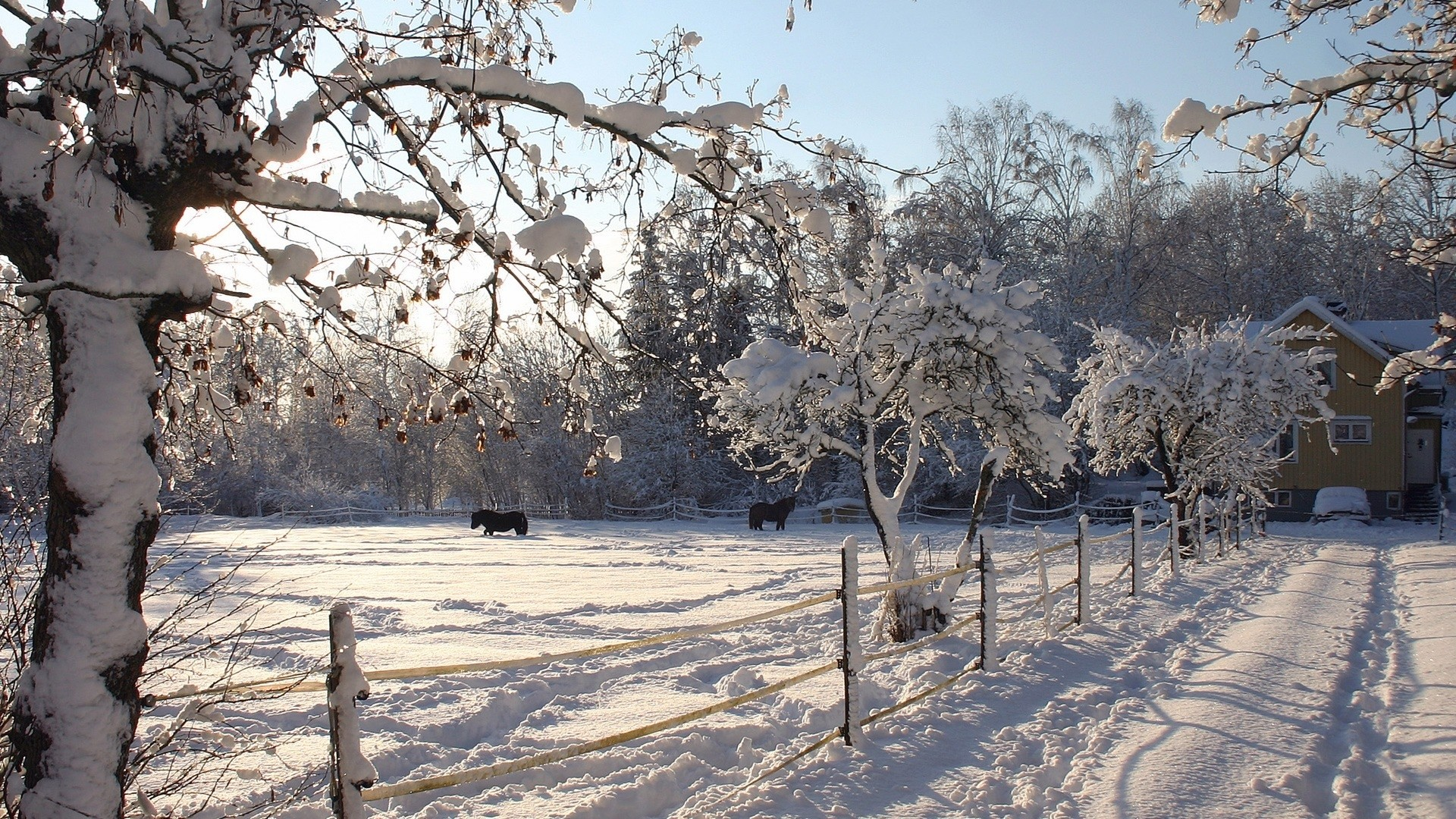 Get the latest horses, shelter, snow news, pictures and videos and learn  all about horses, shelter, snow from wallpapers4u.org, your wallpaper news  source.