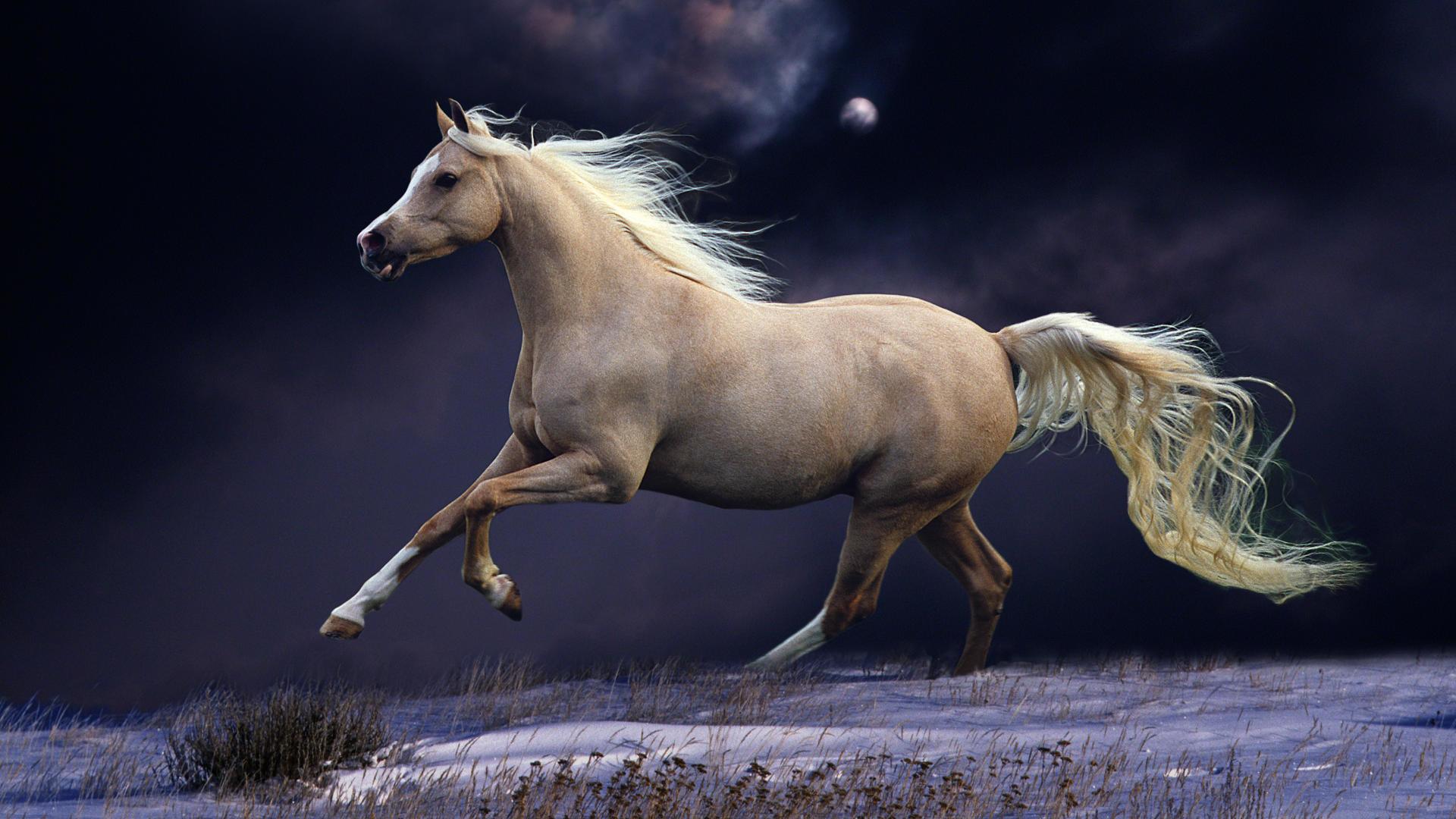 0 Horse Wallpapers Horse Wallpapers Best Wallpapers