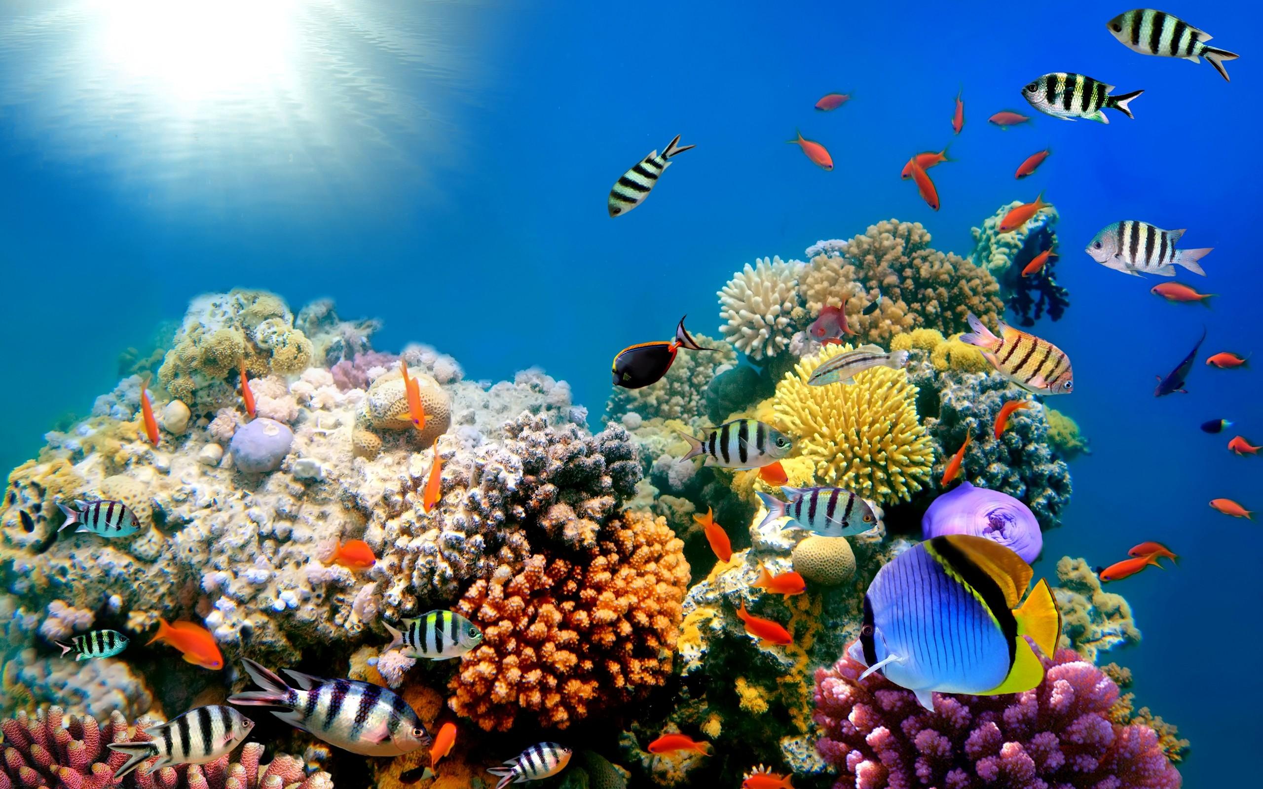 fish wallpapers for desktop. Â«Â«