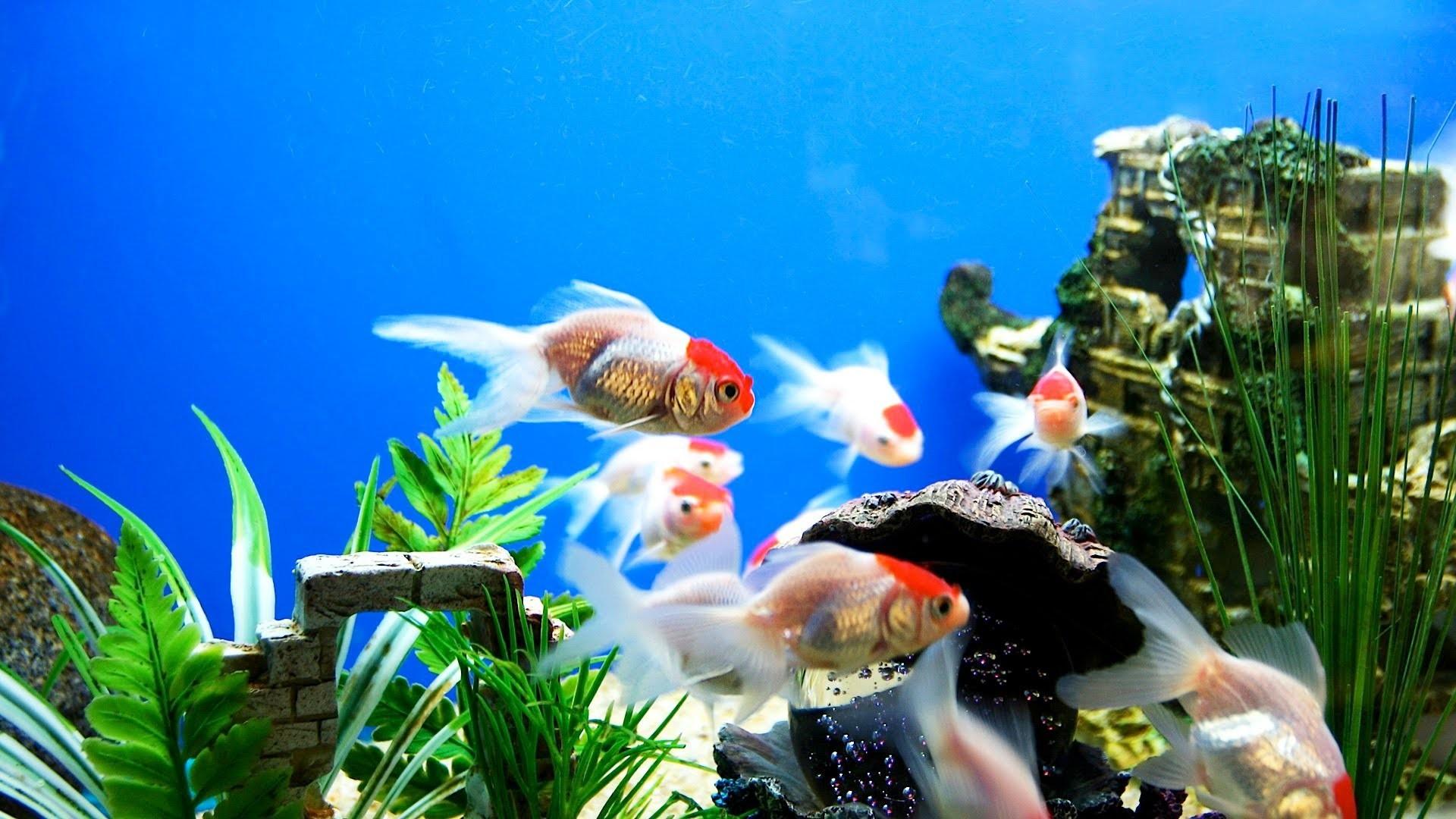 Cool aquarium screensavers for windows cool wallpaper hd : cool