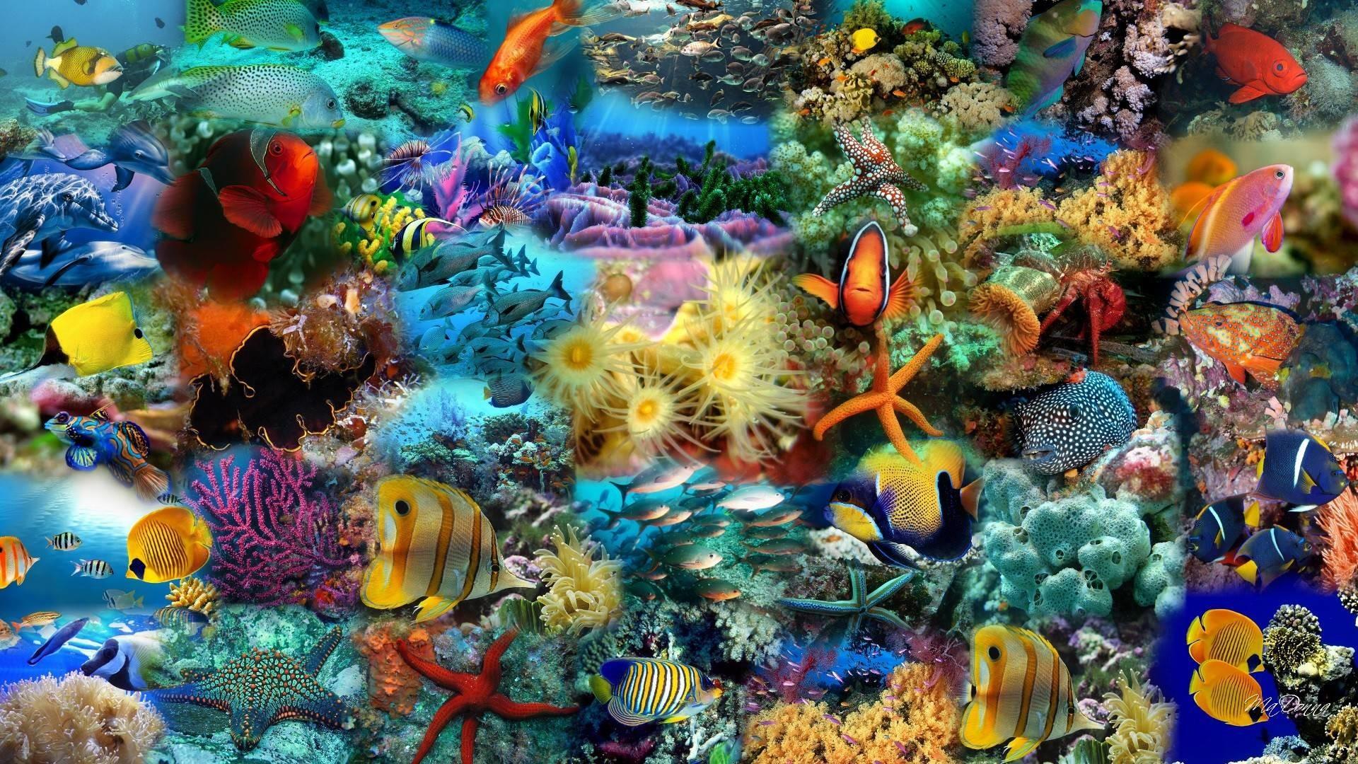 Animal Fish Wallpaper 07   hdwallpapers-