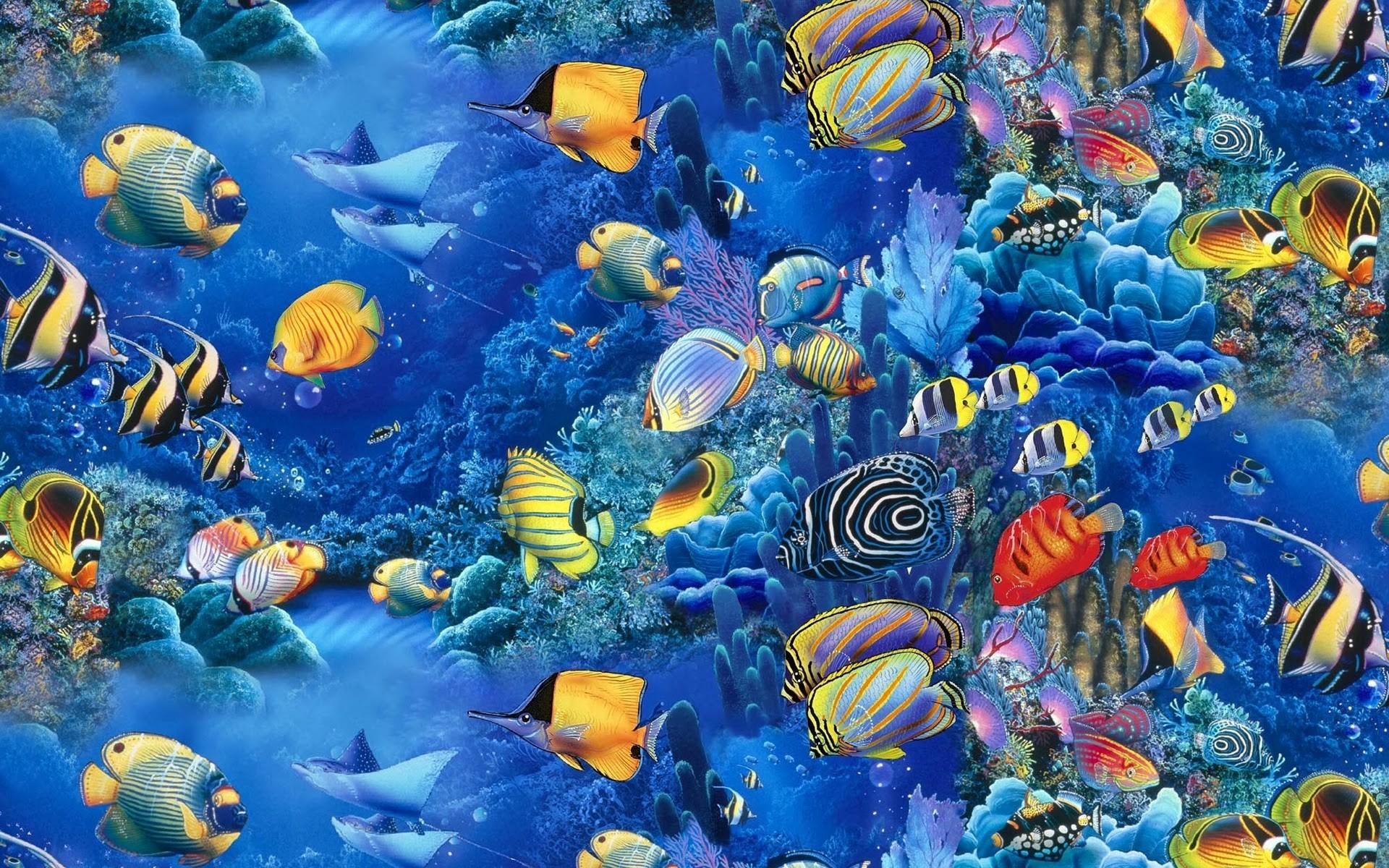 Beautiful Fish Wallpapers Free Download HD Wallpapers Pop 1920×1080 Images  Of Fish Wallpapers (