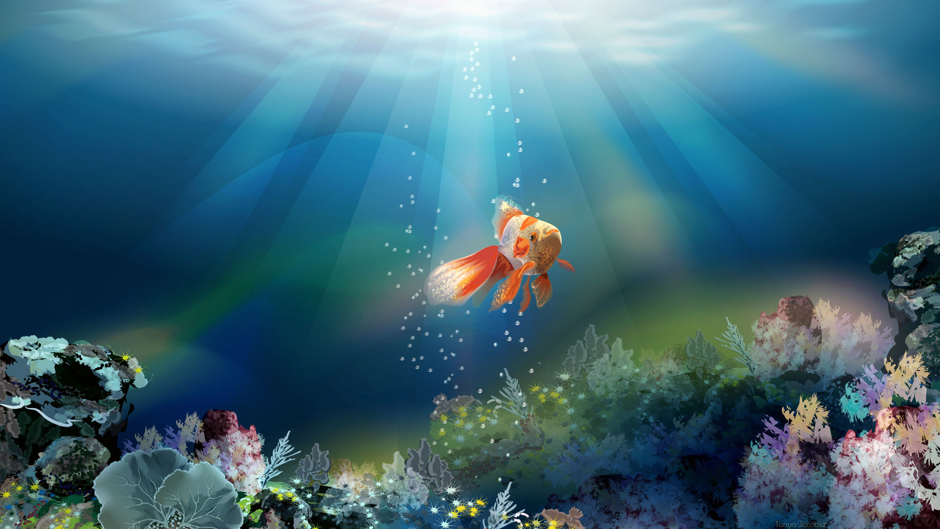 Full HD p Fish Wallpapers HD Desktop Backgrounds x