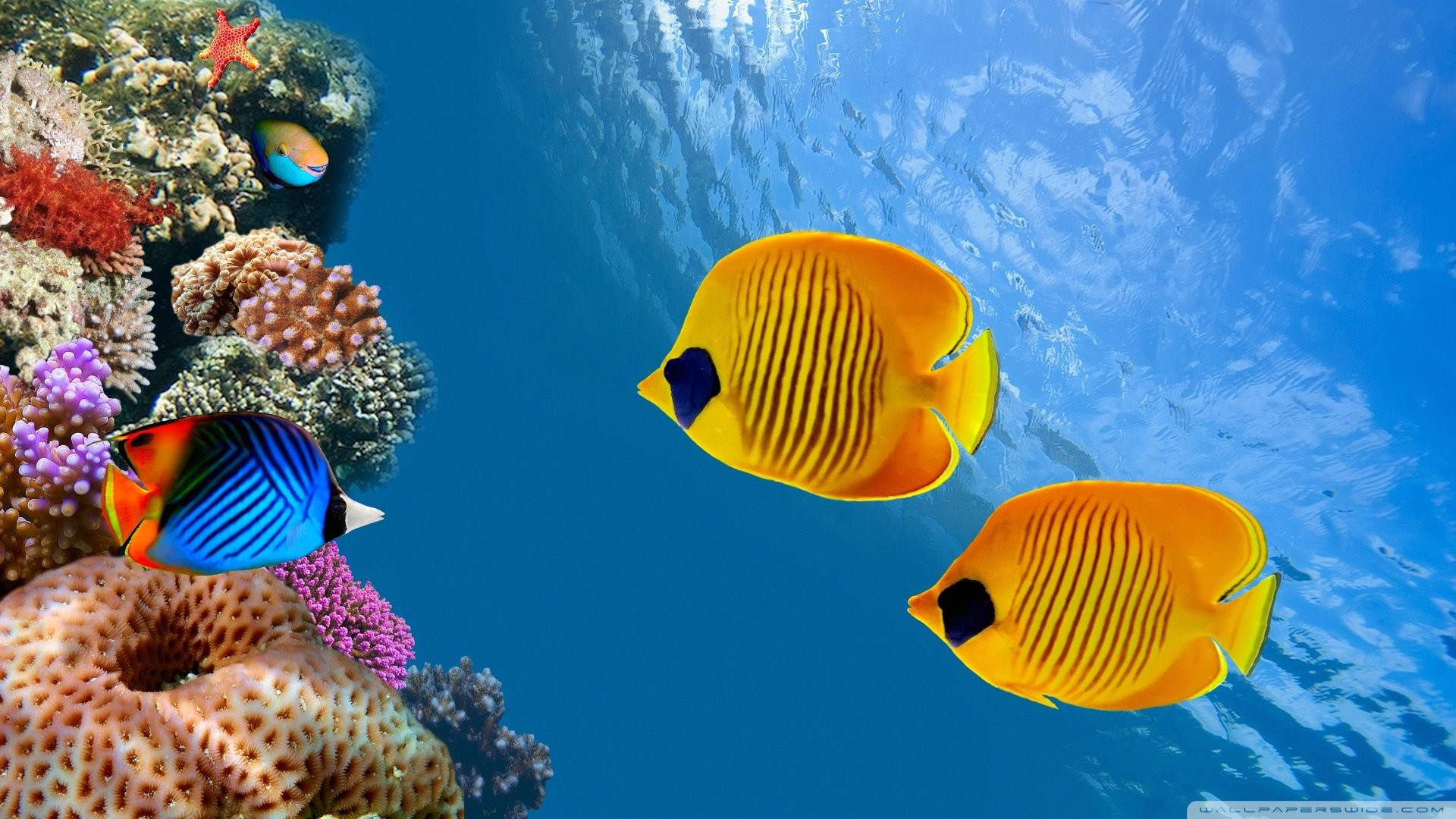 Fish HD Wallpapers Backgrounds Wallpaper