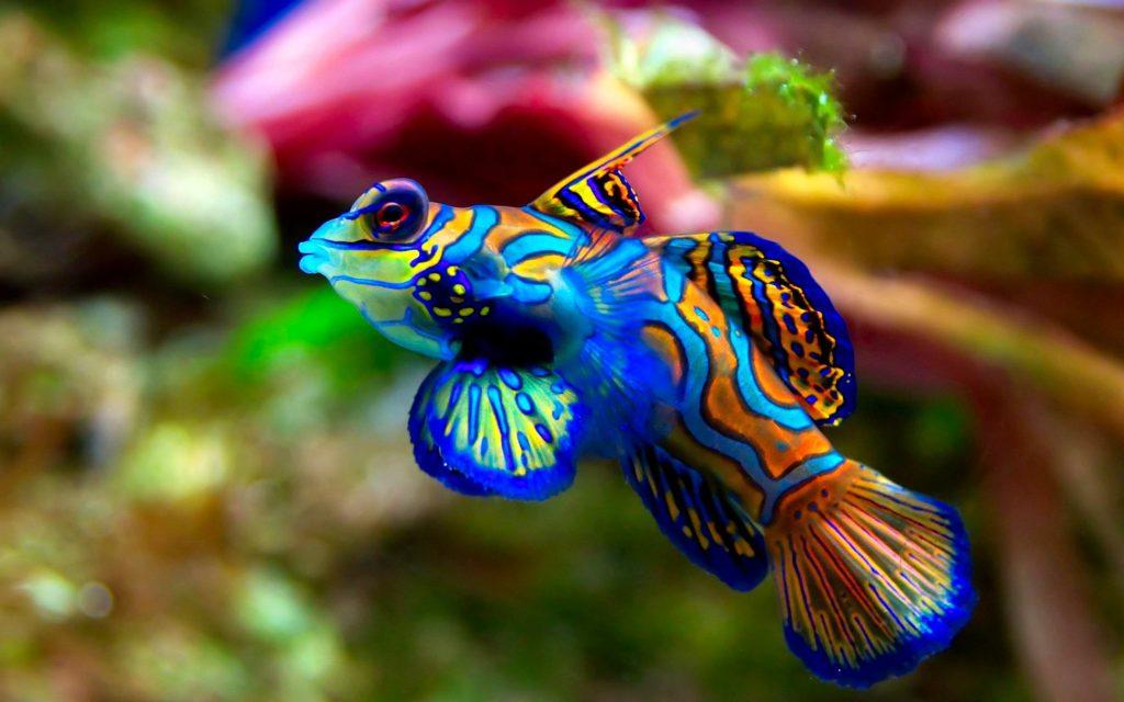 fish wallpaper cool. Â«Â«