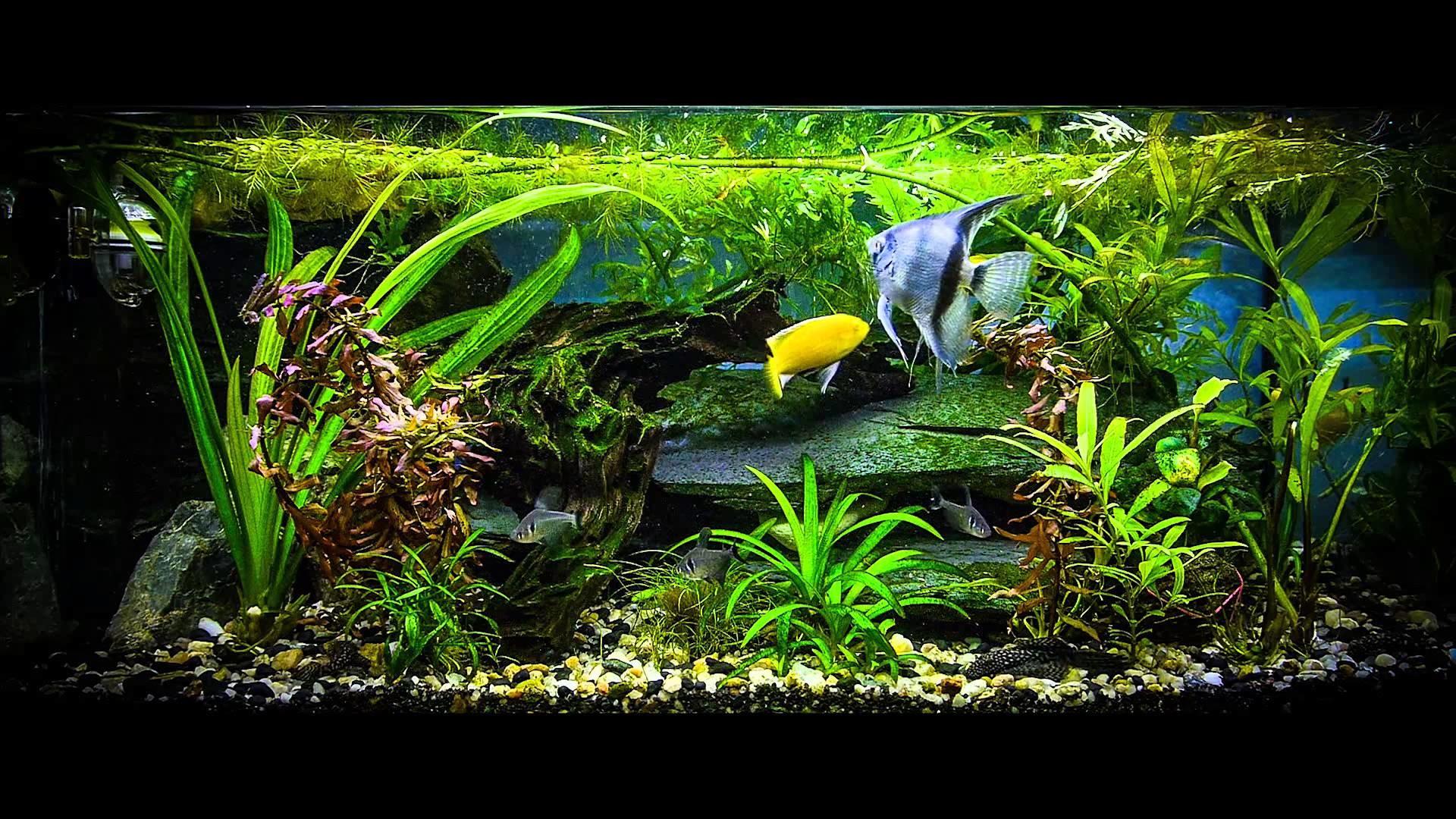 Full Size of Fish Tank Fish Tank Screensaverdows Download Best Free For  7fish Mac Free Fish …
