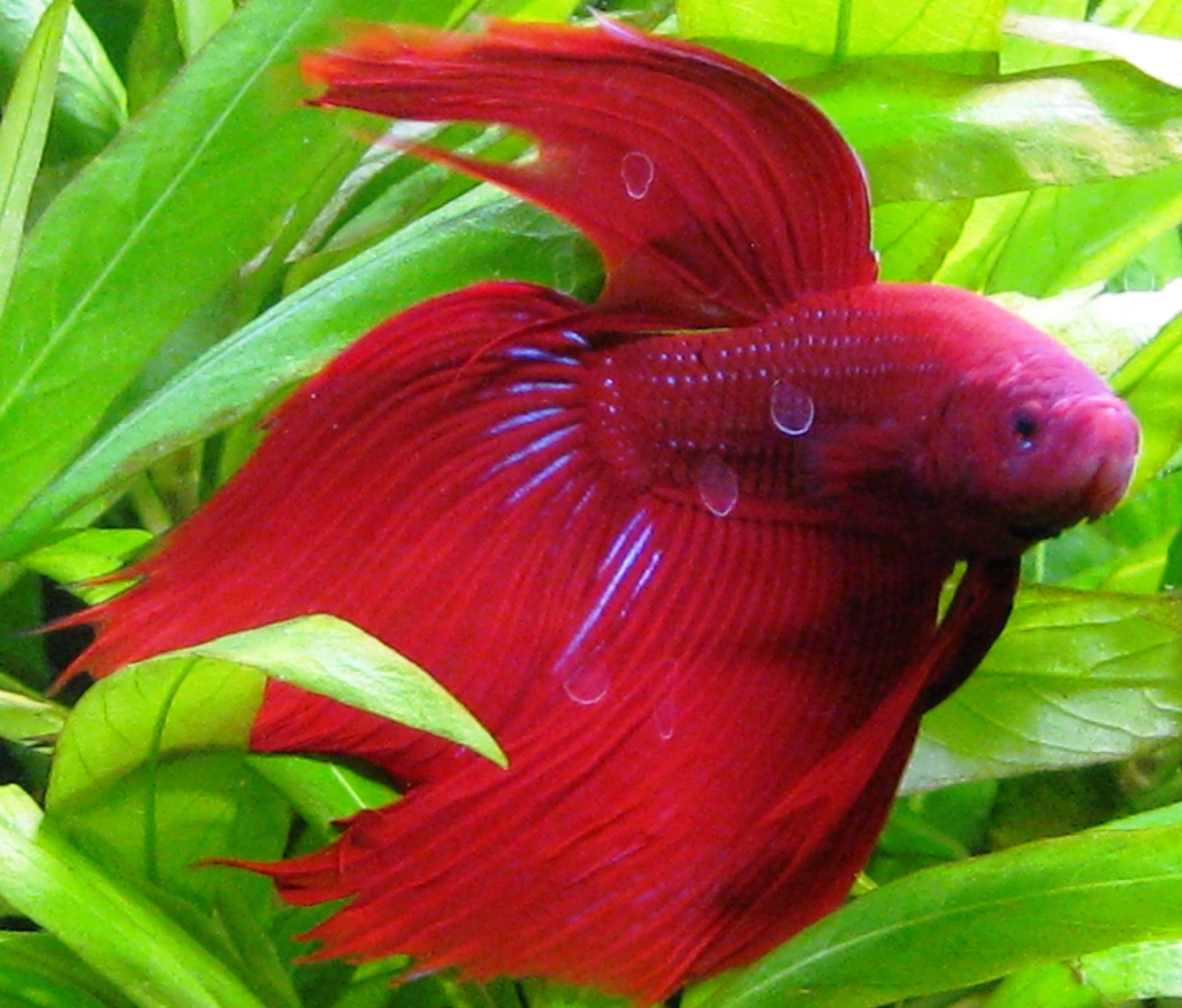 Fish Animal   Freshwater Fish Wallpaper – HD Wallpapers
