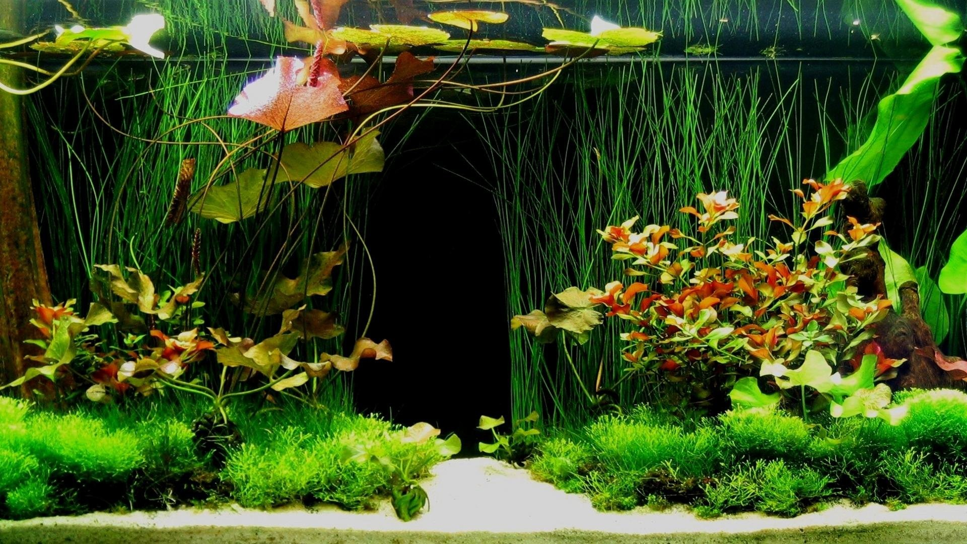 Aquarium Screensaver Free Download For Android : Beautiful aquarium  wallpaper 360725 walldevil