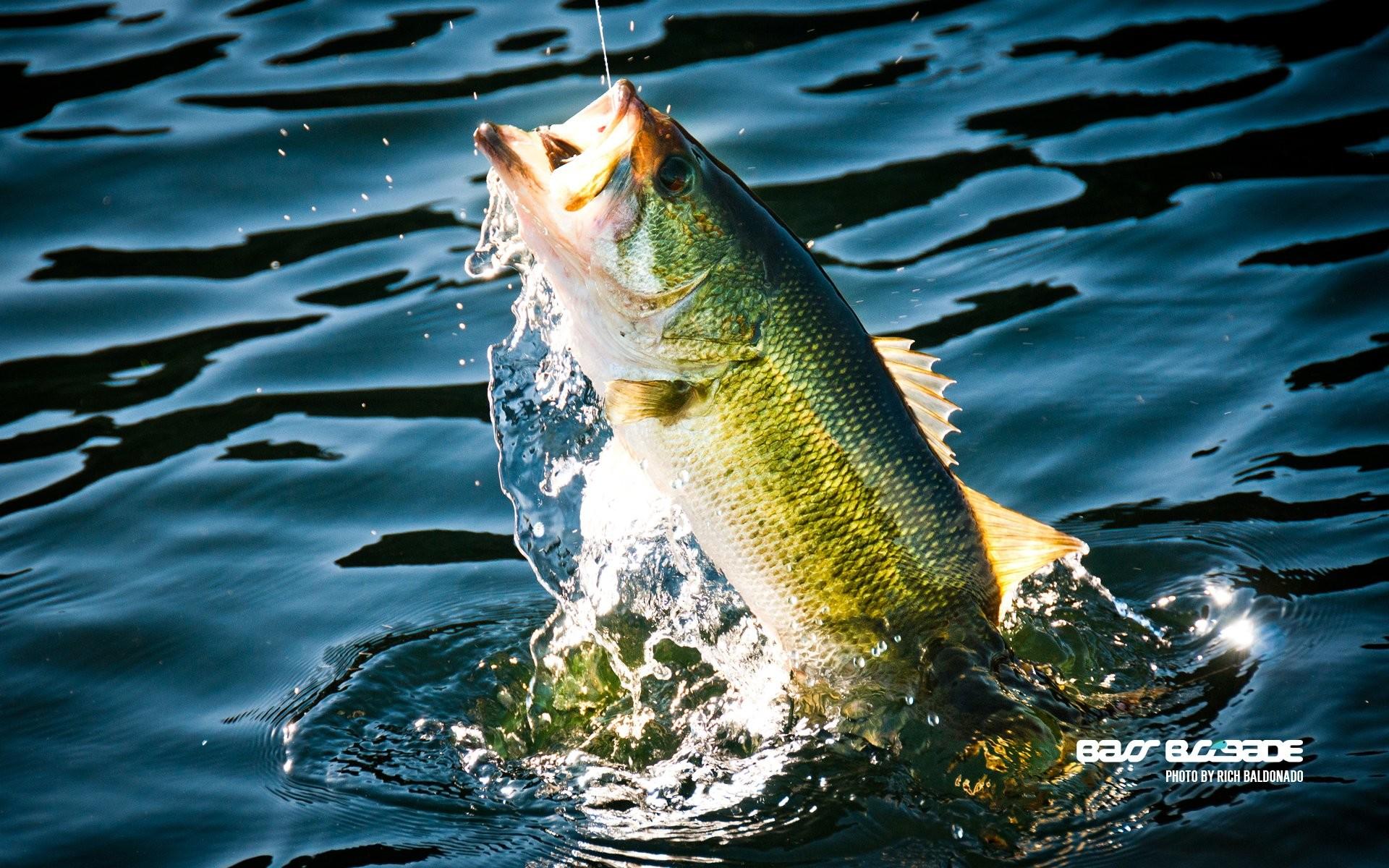 FISHING fish sport water fishes lake river bass wallpaper   .