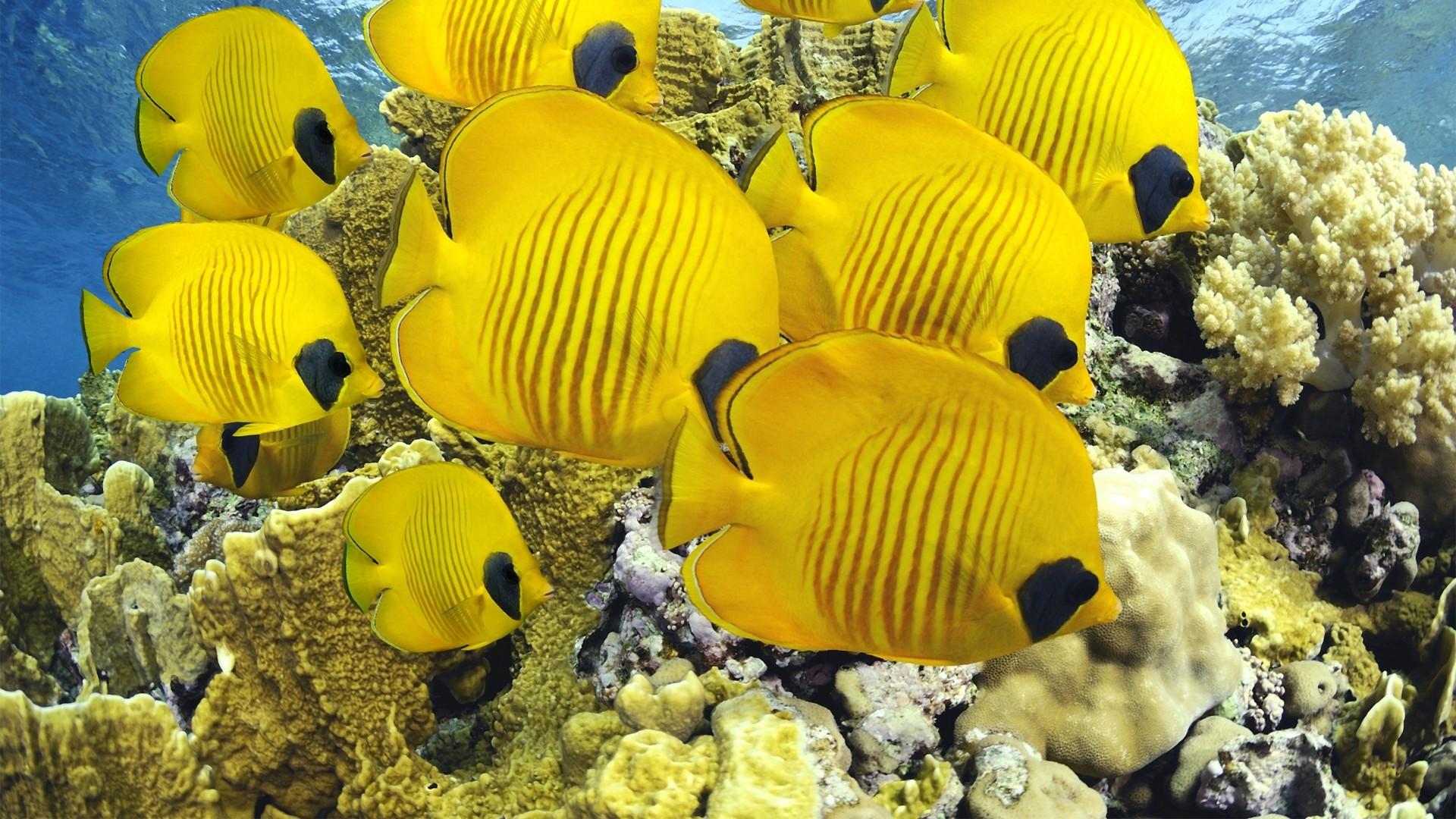 Preview wallpaper fish, shape, underwater, sea, ocean 1920×1080