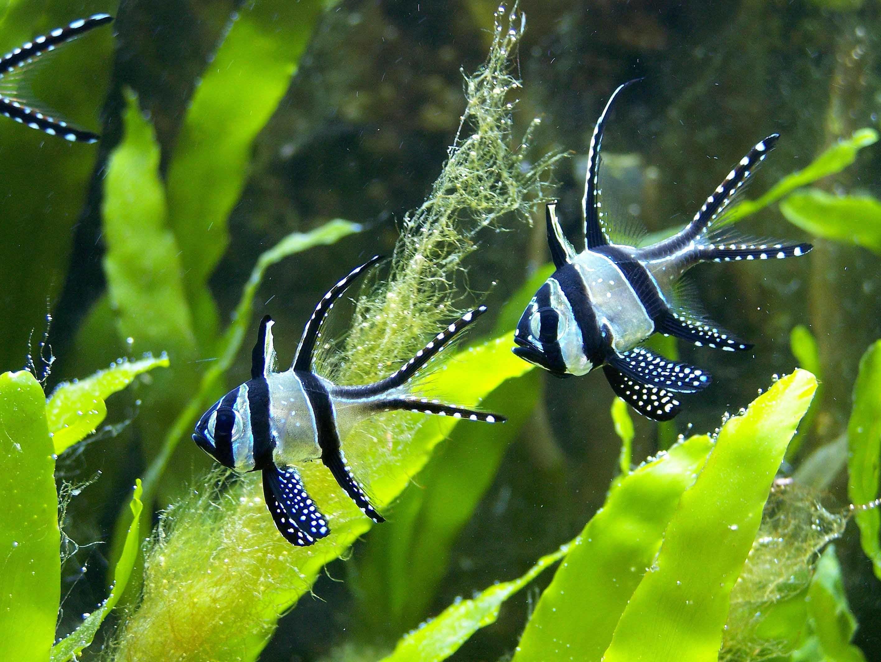 Aquarium Wallpaper Free Download For Pc : Beautiful fish photos colorful  exotic fish wallpapers