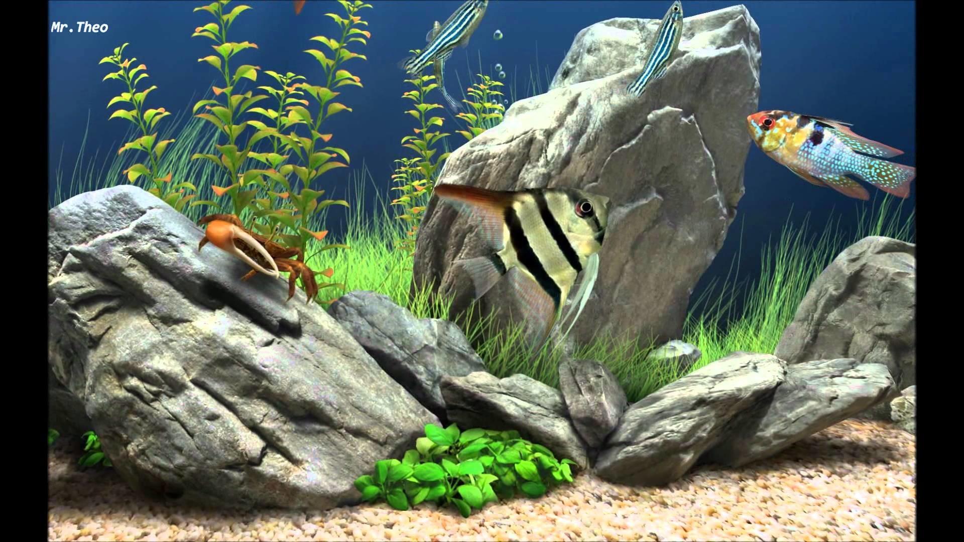 Full Size of Fish Tank Fish Tank Screensaver Windows Marine Aquarium Live  Free Downloadfish Mac Screensavers …