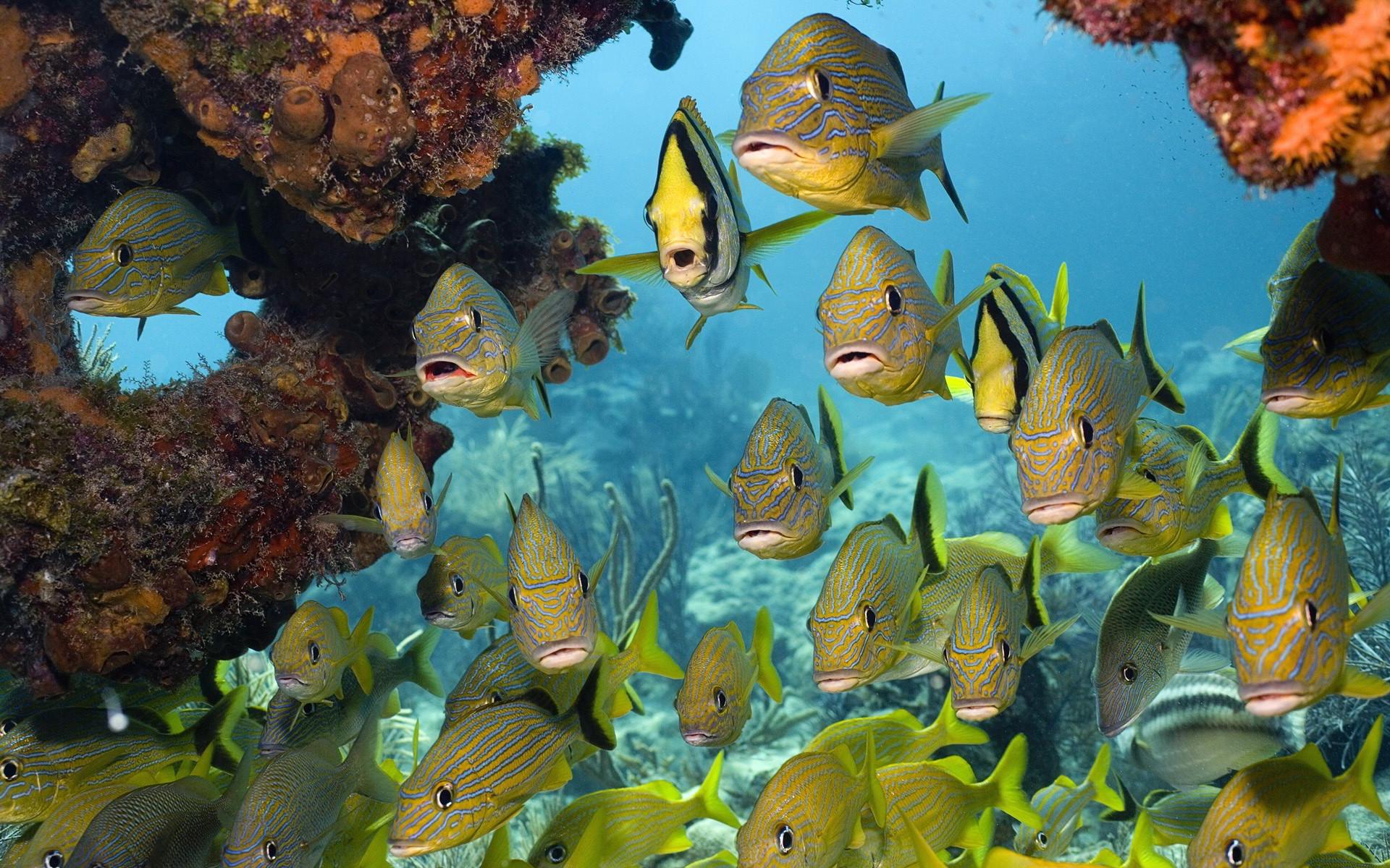 fire fish beautiful. Â«Â«
