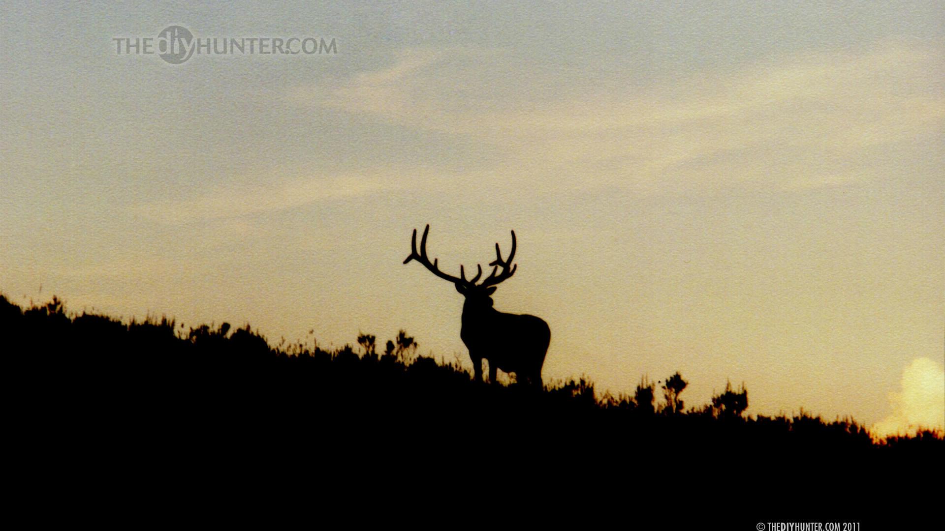 Hunting Wallpaper HD | Wallpapers 4k | Pinterest | Hunting wallpaper and  Wallpaper