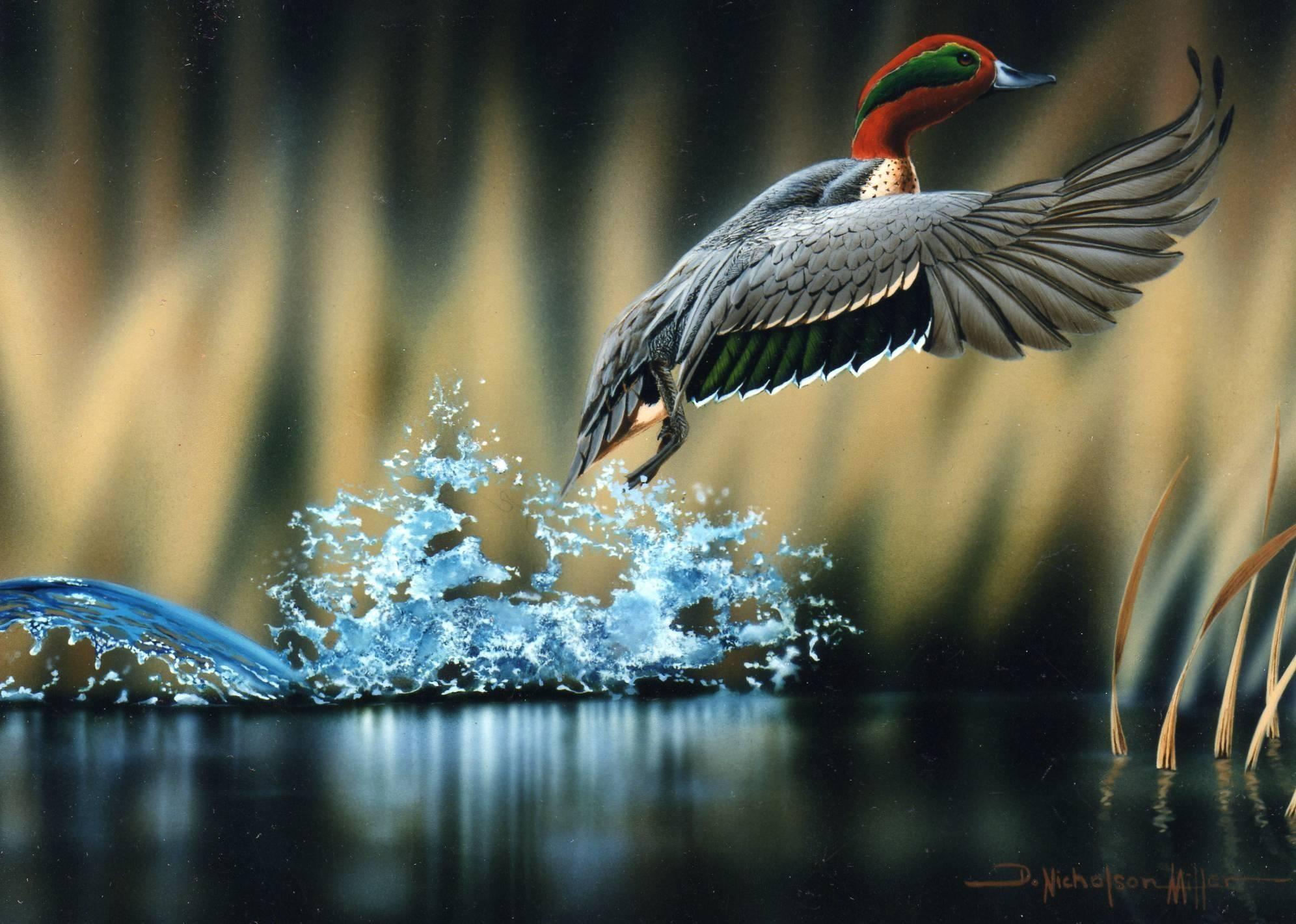 hd waterfowl wallpaper …