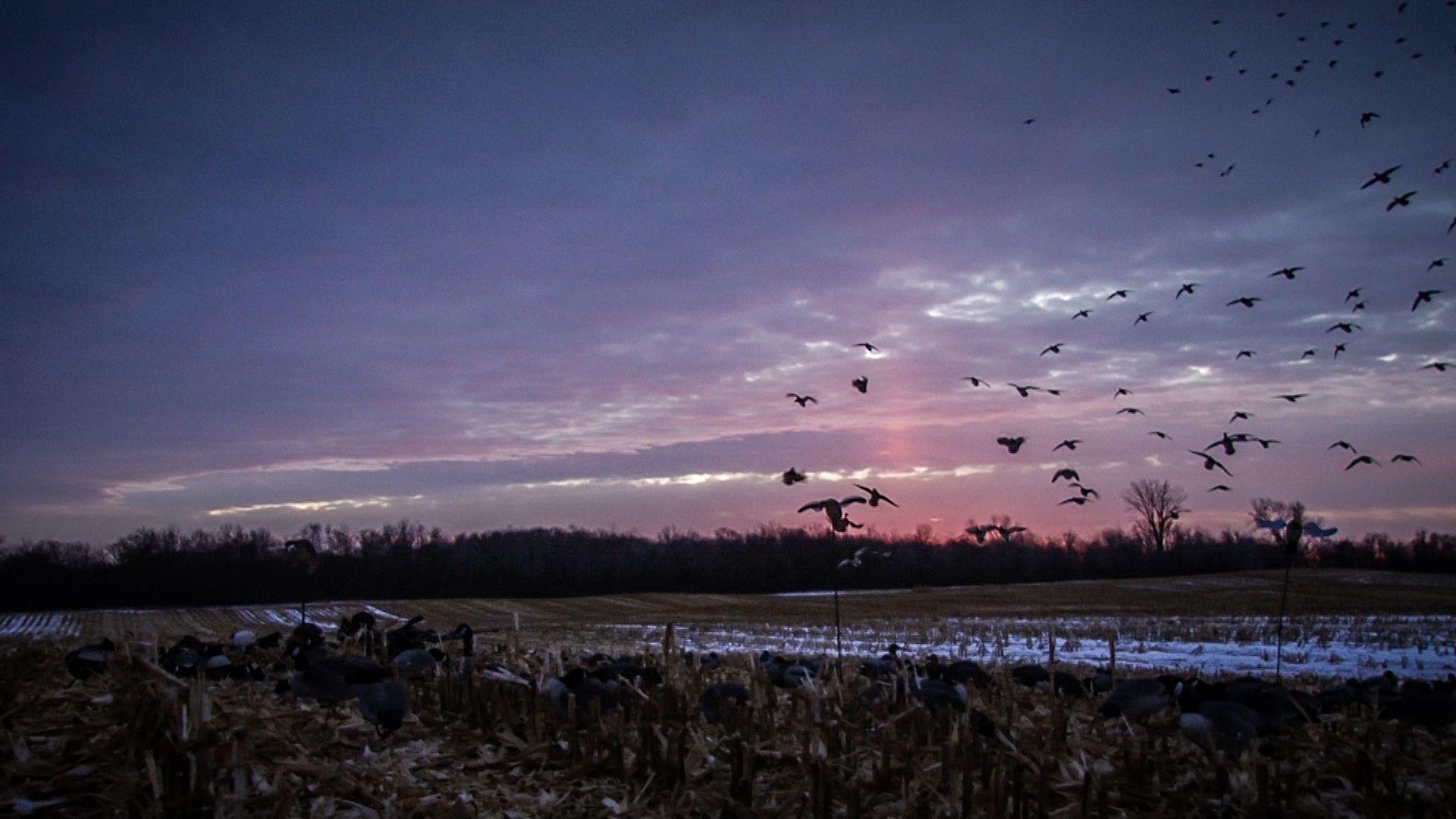 Waterfowl Hunting Blogs